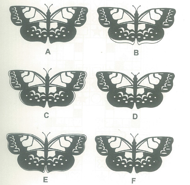 Interesting IQ Test Picture(1):  Find the two butterfly with same shape quickly