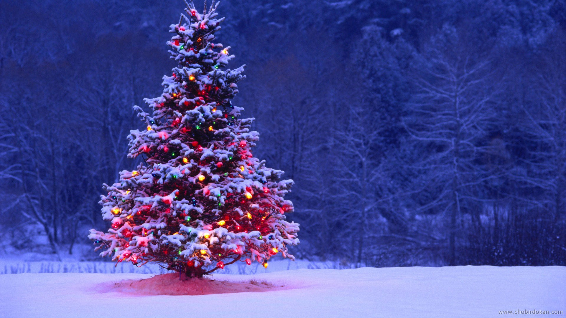 2016 Christmas Wallpaper HD Tree With Heavy Snow 19201080 3