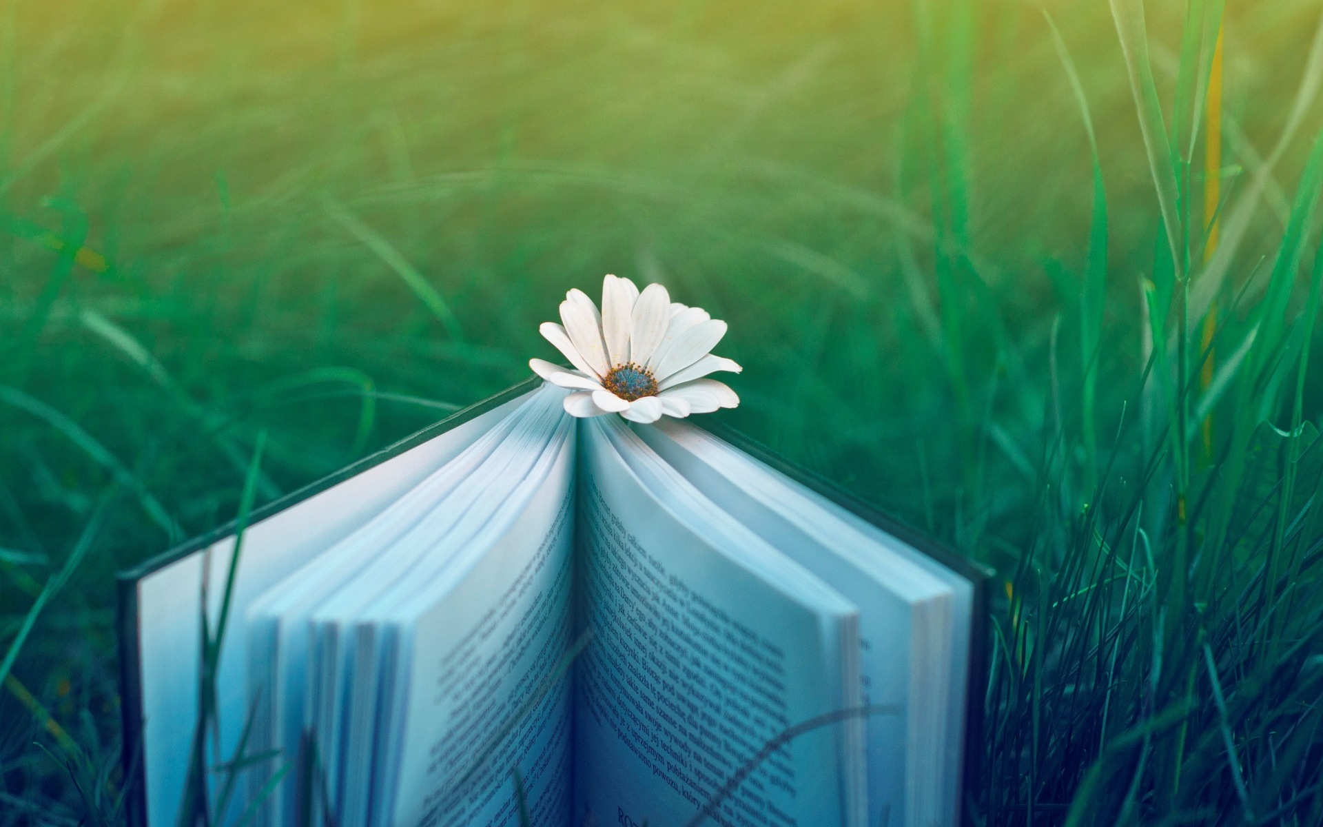 a white flower working as bookmark reading is made pleasant and comfortable imagine lying on the grass hd creative wallpaper free wallpaper world free wallpaper world