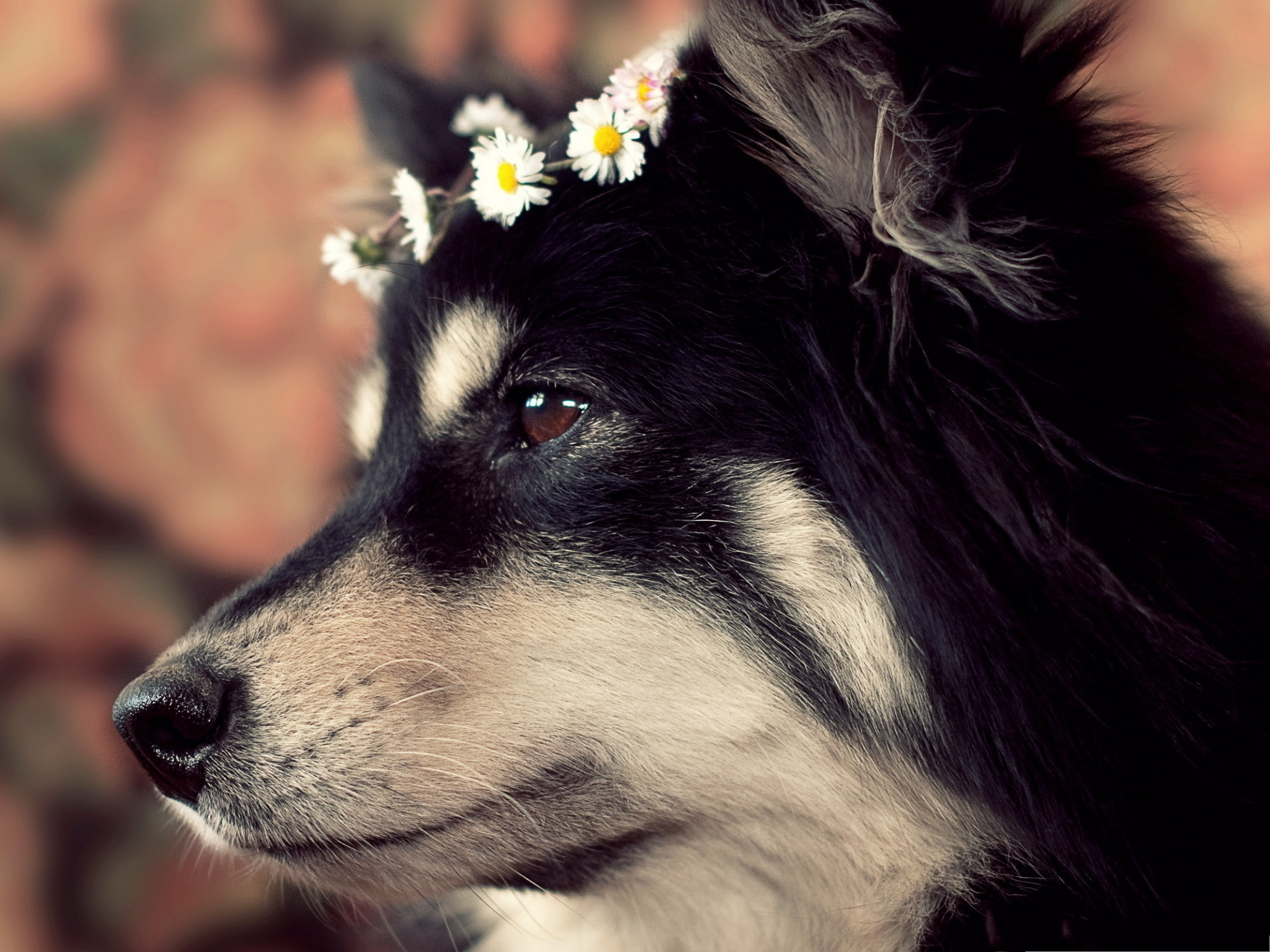 click to free download the wallpaper--Alaskan Malamute Dog, Puppy with Flowers on the Head, Sweet Master 2048X1536 free wallpaper download