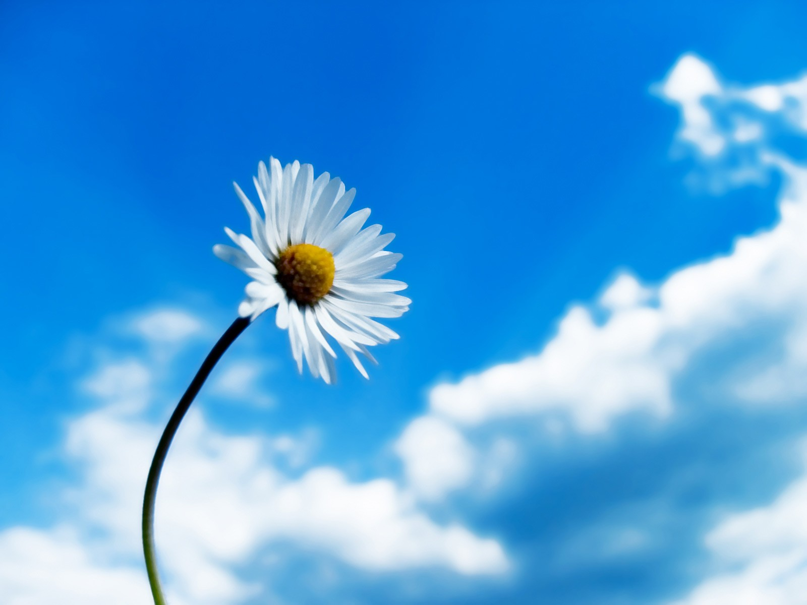 click to free download the wallpaper--Amazing Landscape of Nature, the Rising Flower, the Blue Sky, Quite an Optimist!