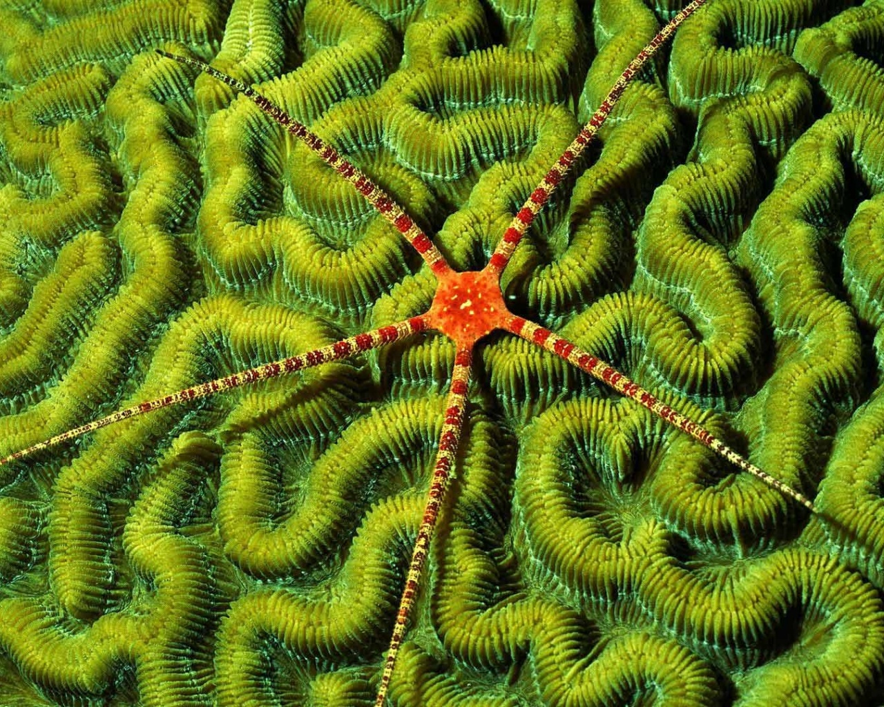 click to free download the wallpaper--Amazing Nature Landscape Images, Sea Star on Green Plants, Meant for Each Other