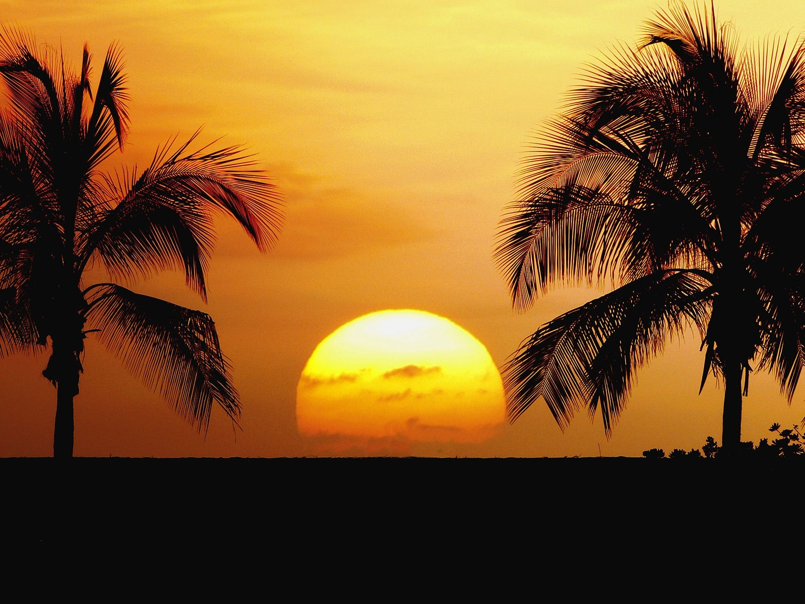 click to free download the wallpaper--Amazing Nature Landscape, the Setting Sun, Golden Horizon, Coconut Trees Alongside