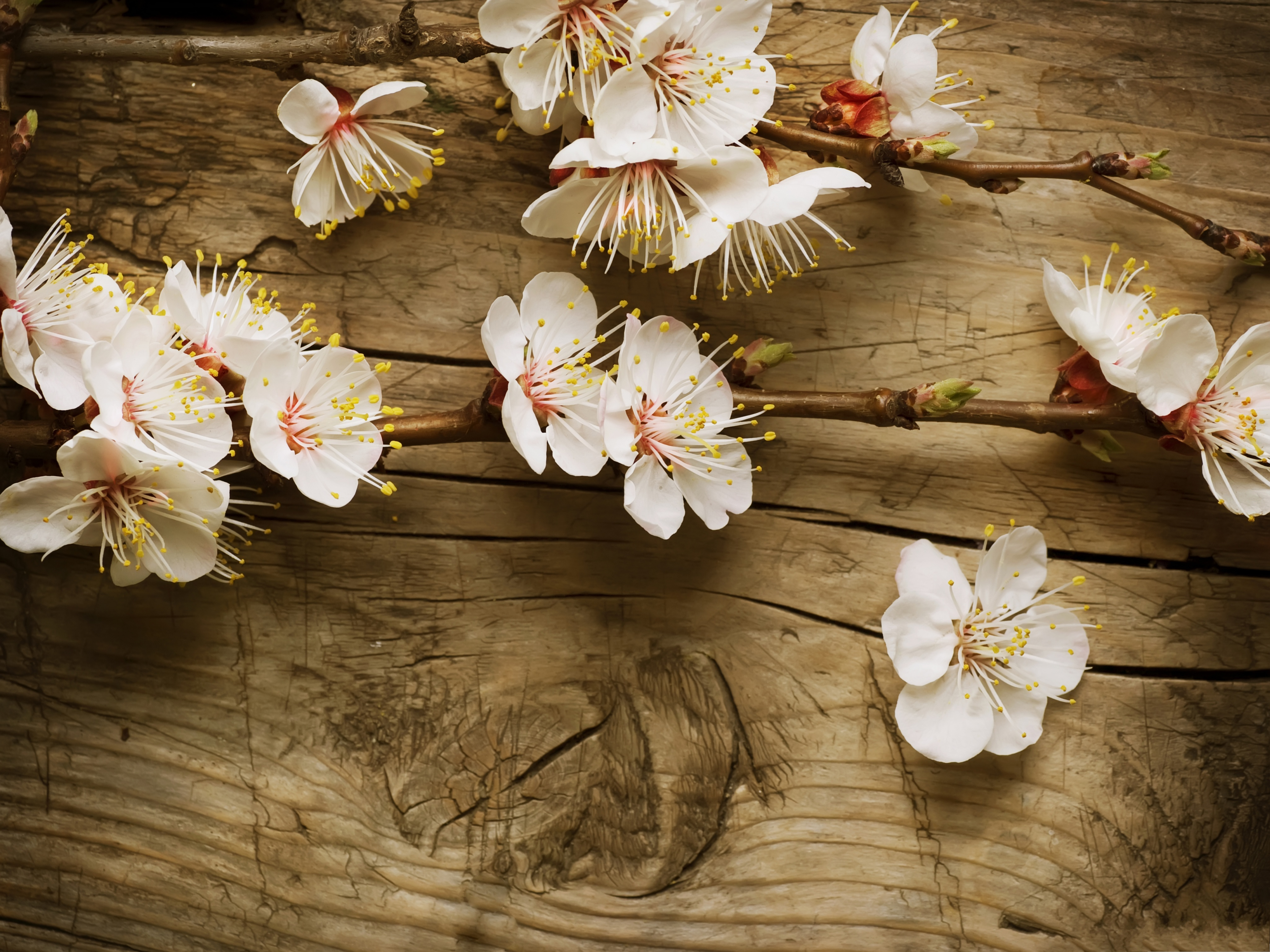 click to free download the wallpaper--Apple Flowers Image, Tiny White Flowers on Wood, Amazing Scenery 4096X3072 free wallpaper download