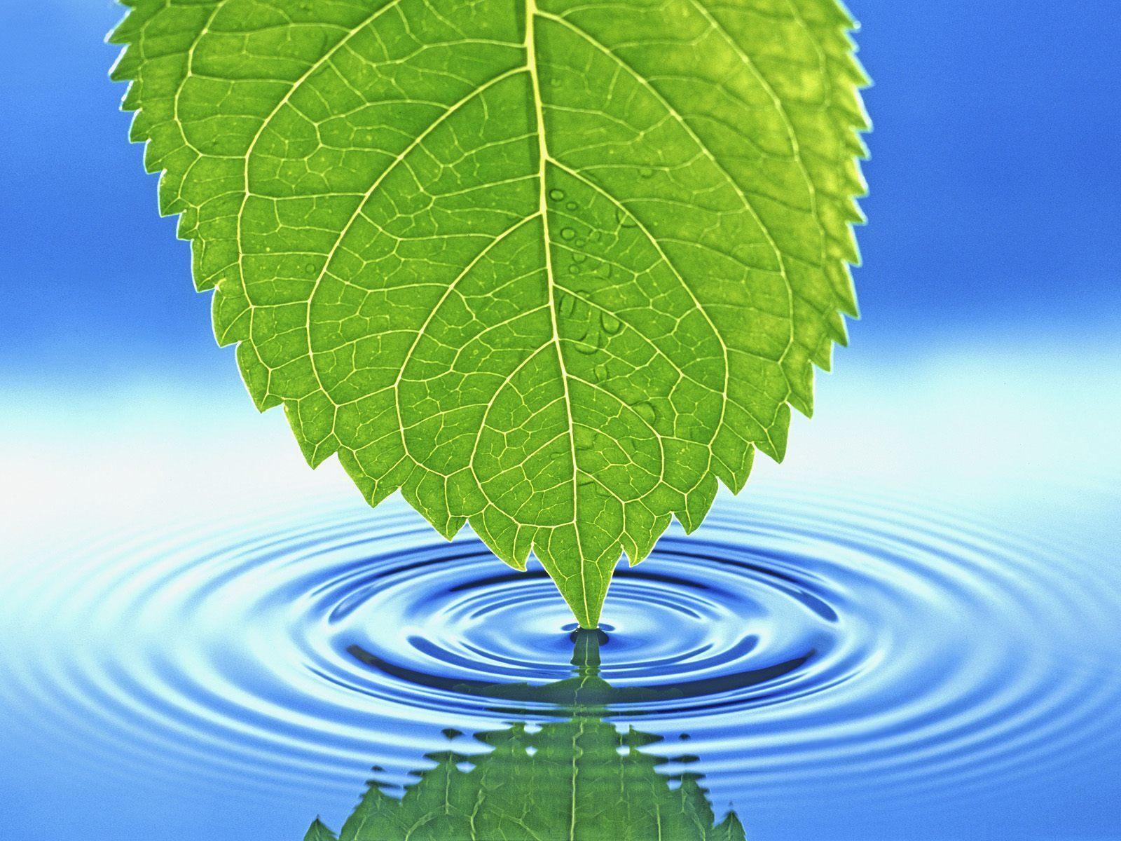 click to free download the wallpaper--Beautiful Image of Landscape, a Green Leaf Touching Water, Ripples Generated