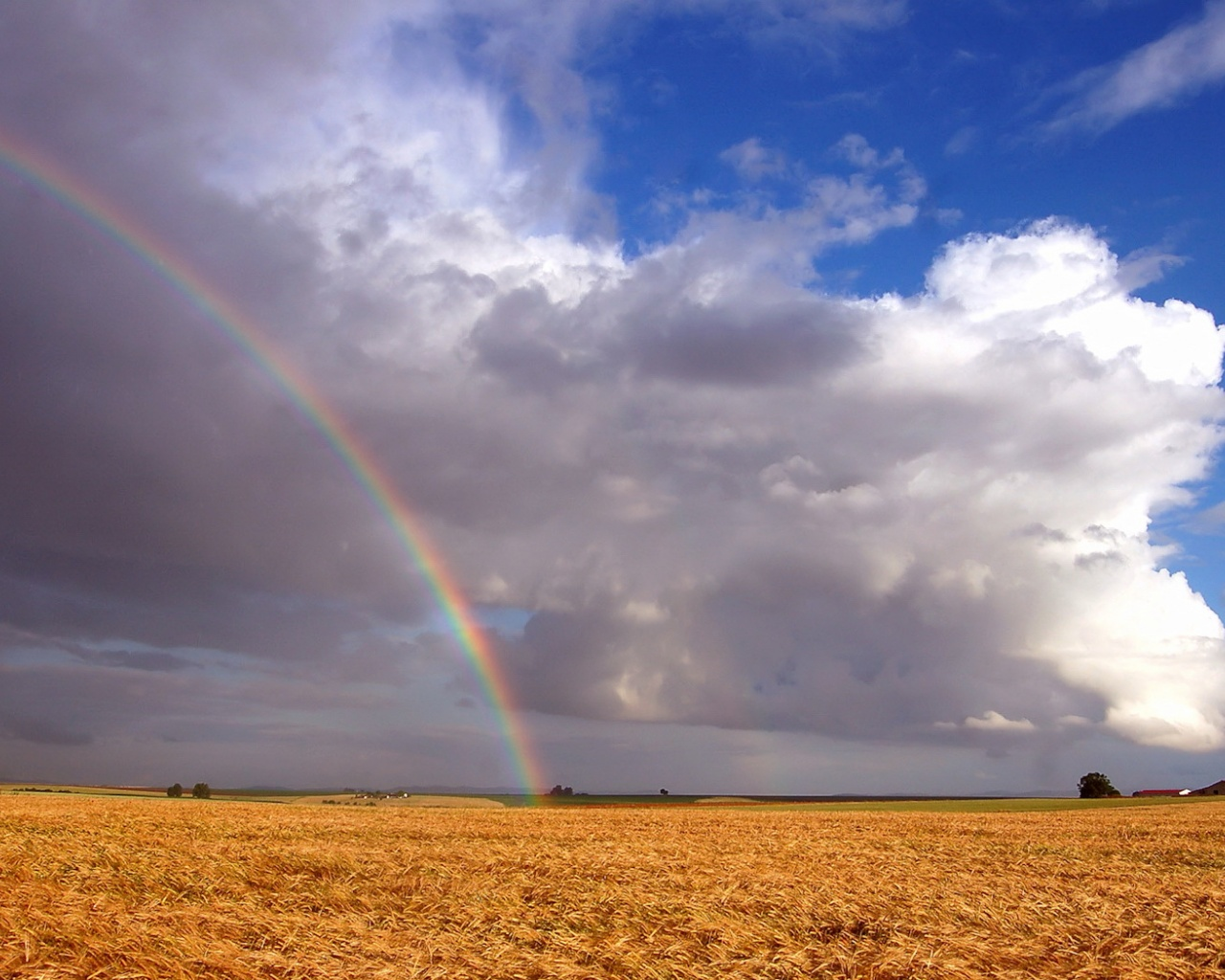 click to free download the wallpaper--Beautiful Image of Natural Landscape, Rainbow over Field, Impressive Scene