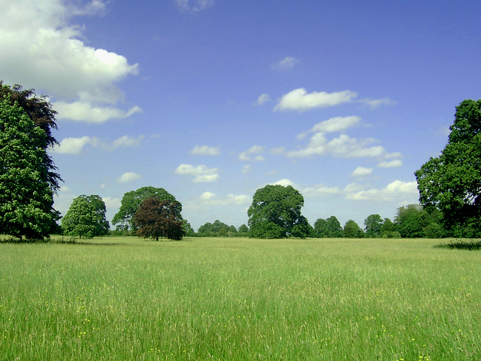 click to free download the wallpaper--Beautiful Image of Nature Landscape, Green Scene, the Blue and Cloudless Sky