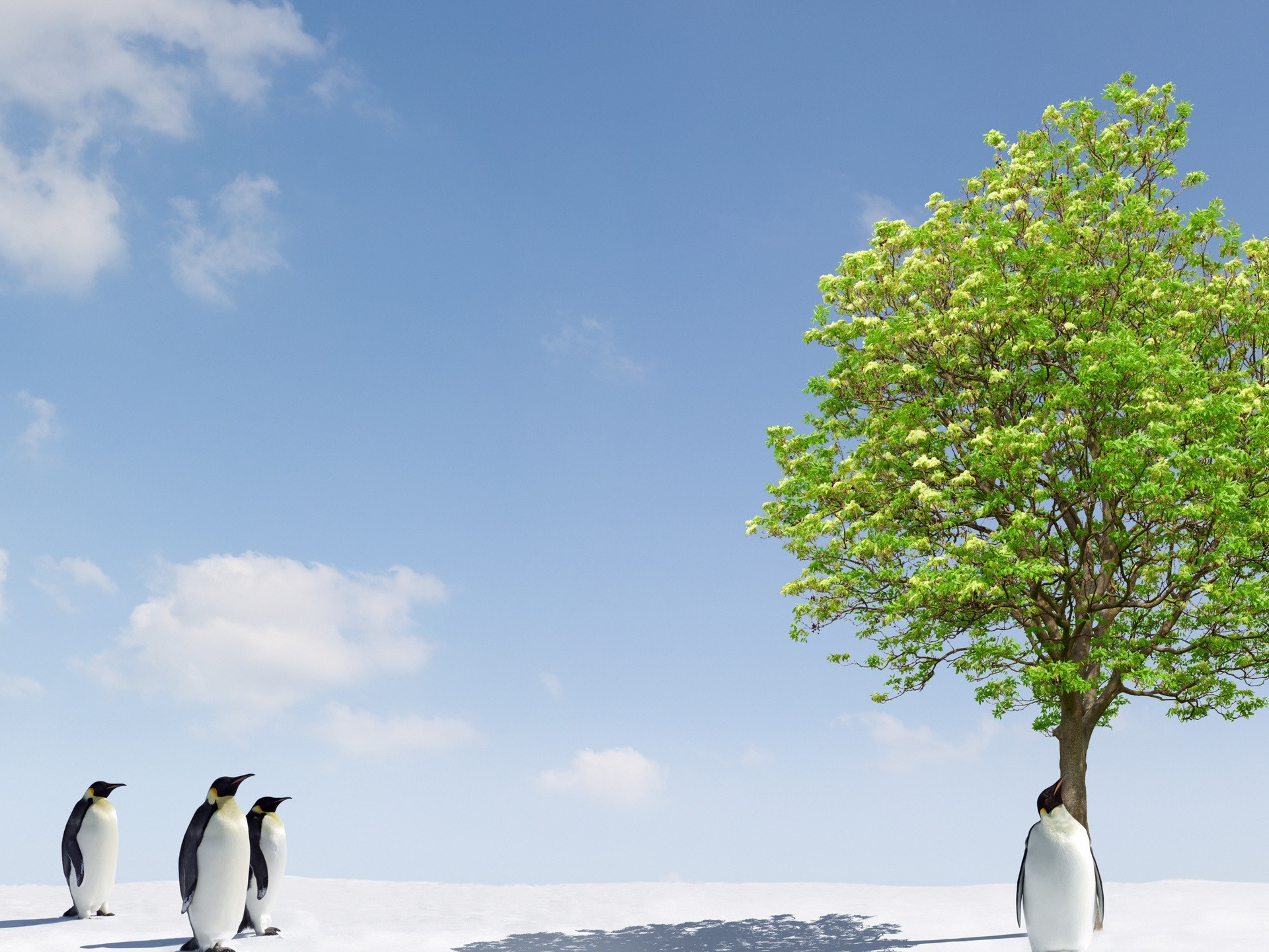 click to free download the wallpaper--Beautiful Image of Nature Landscape, Penguins Around a Green Tree, a Rarely Seen Scene