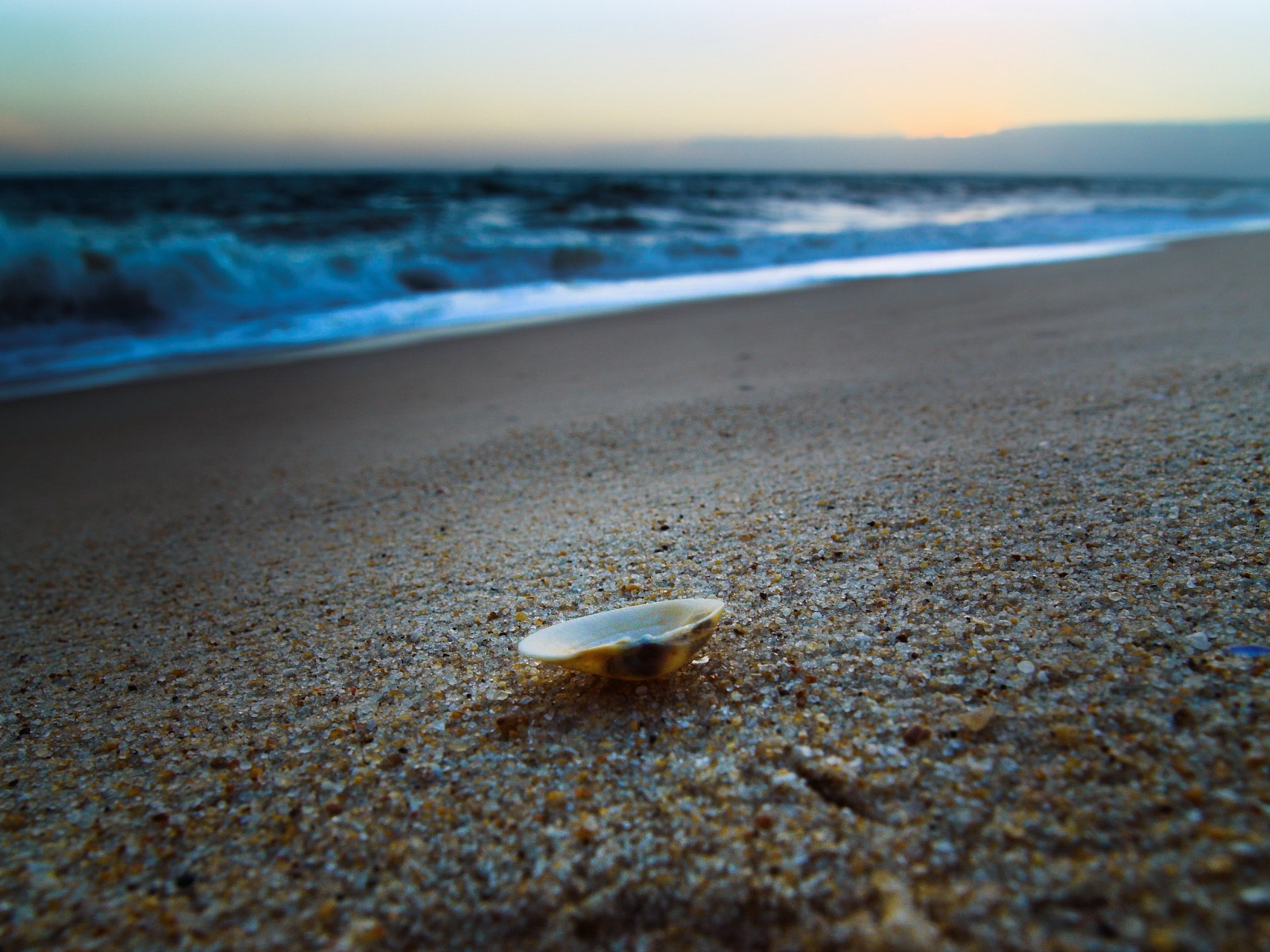 click to free download the wallpaper--Beautiful Landscape of the Beach, a Shell Falling on the Sand, Won't Leave Its Motherland