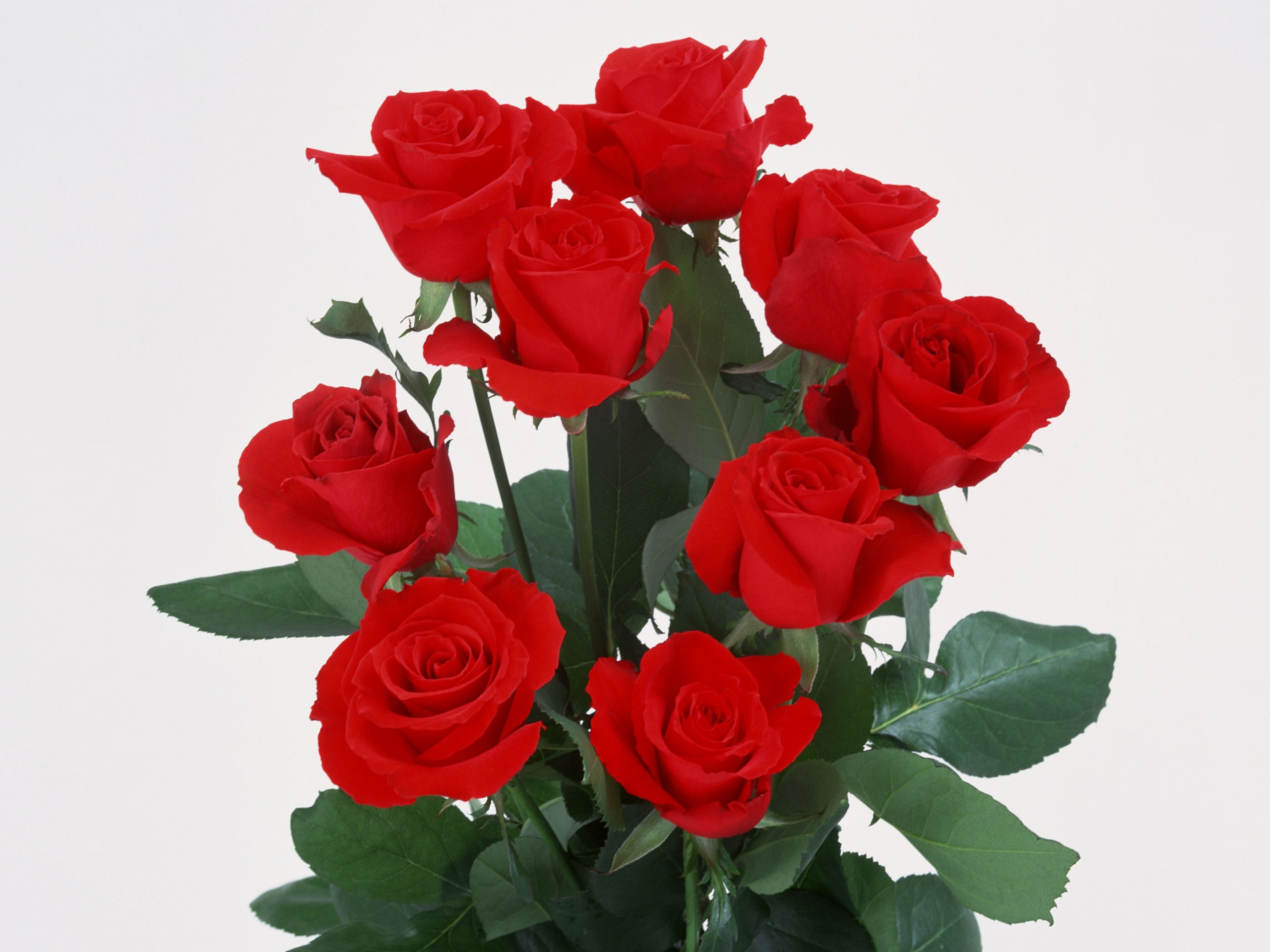 Beautiful landscape with flowers a bouquet of red roses all beautiful landscape with flowers a bouquet of red roses all blooming best timing izmirmasajfo