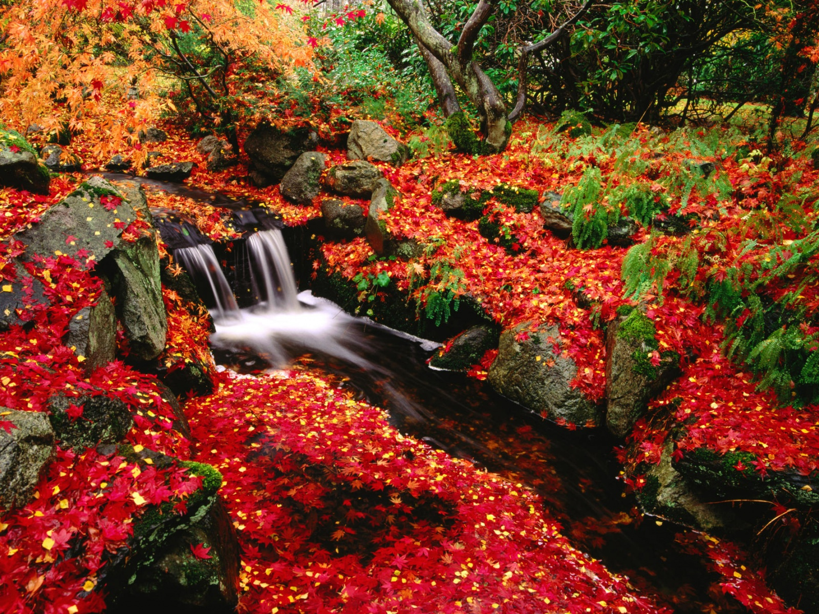 click to free download the wallpaper--Beautiful Nature Landscape, Red Leaves Along a Clean Waterfall, Incredible Scenery