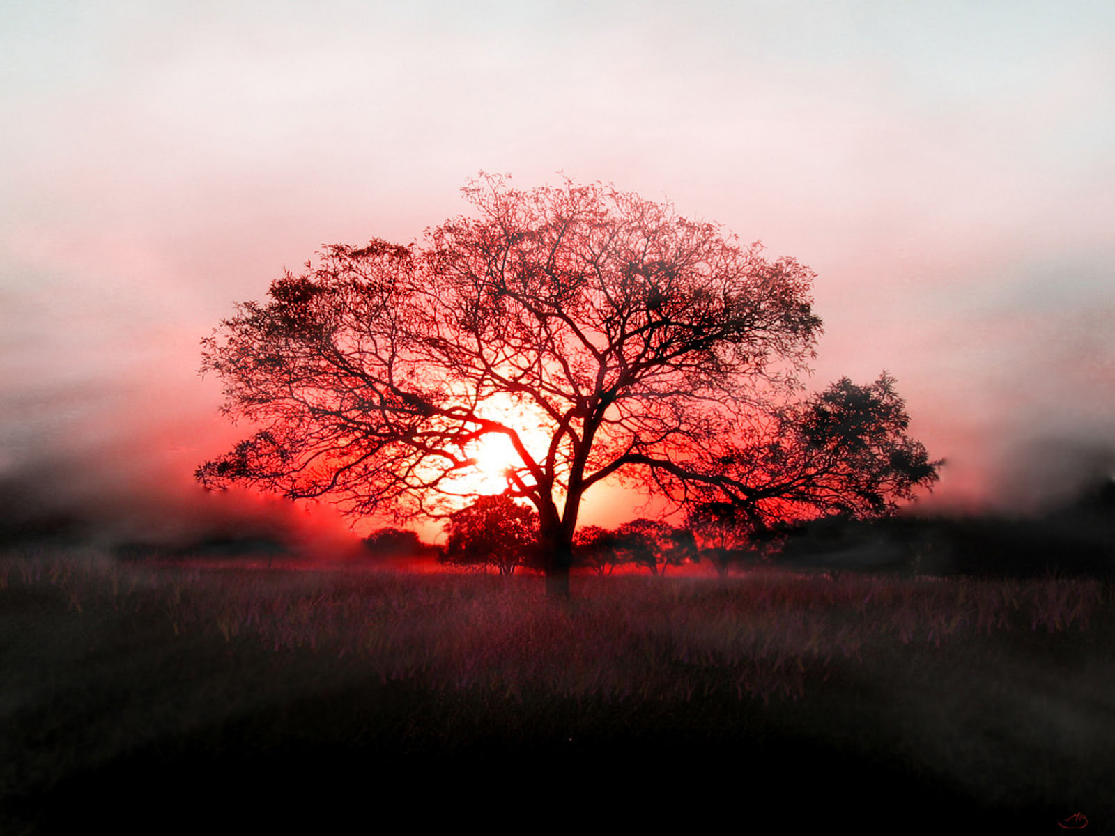 click to free download the wallpaper--Beautiful Pics of Nature Landscape, the Red Setting Sun, a Tall and Prosperous Tree