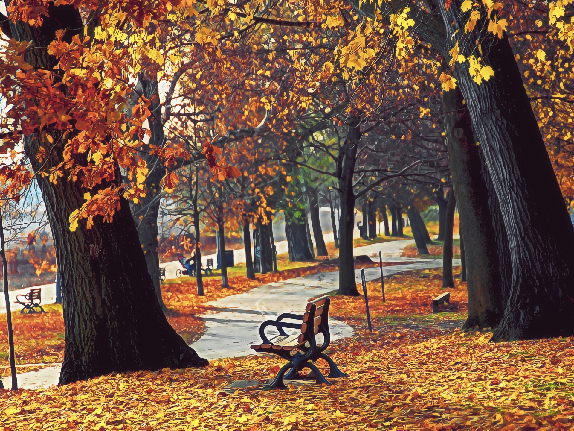 click to free download the wallpaper--Beautiful Posts of Nature, Autumn Retreat, Yellow and Fallen Leaves, Wooden Long Chairs Everywhere  1920X1440 free wallpaper download