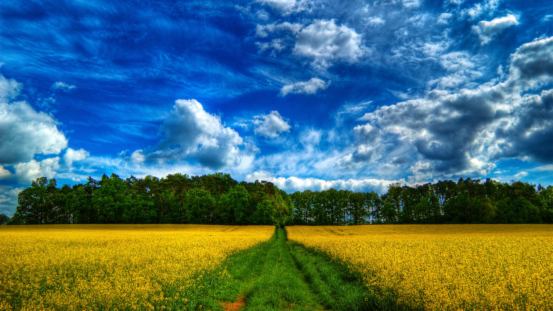 click to free download the wallpaper--Beautiful Scene of Flowers - Rape Flowers in Bloom, the Blue Sky, Green Trees Interspersed 1920X1080 free wallpaper download