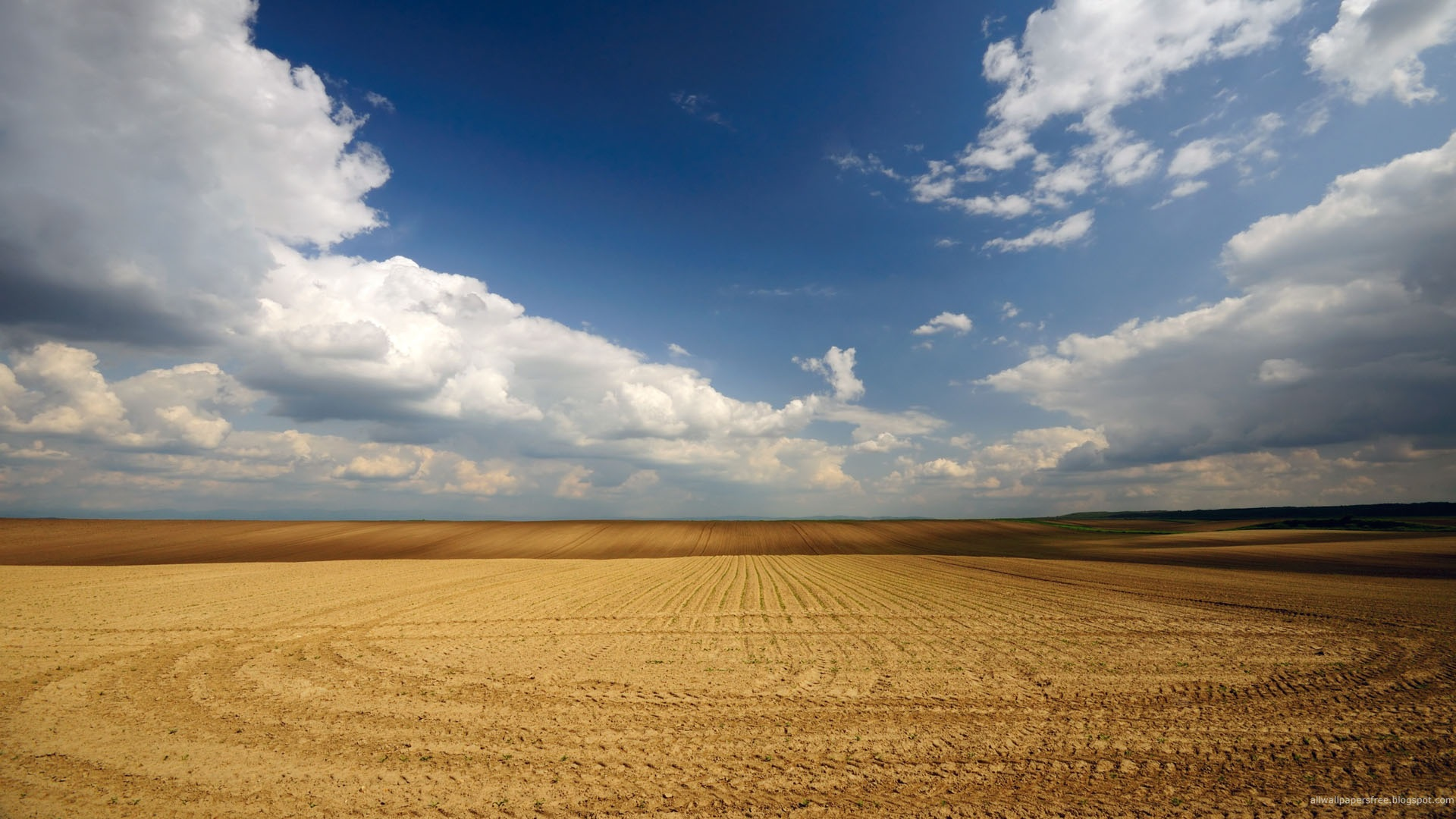 click to free download the wallpaper--Beautiful Sceneries of the World - A Full Screen of Yellow Wheats, the Blue Sky, Fields Seem Endless 1920X1080 free wallpaper download