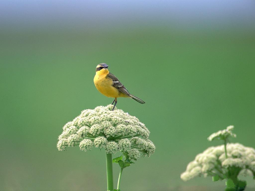 Birds Photography Stan...