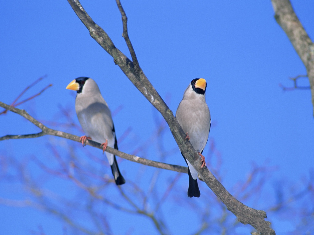 click to free download the wallpaper--Birds Photography, Two Birds Standing on Tree Branch, Keep Each Other Company 1024X768 free wallpaper download