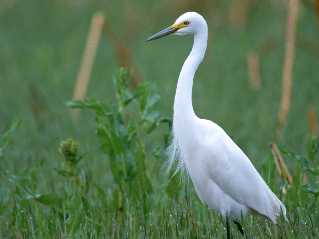 Birds Photography, White and Decent Bird Among Green