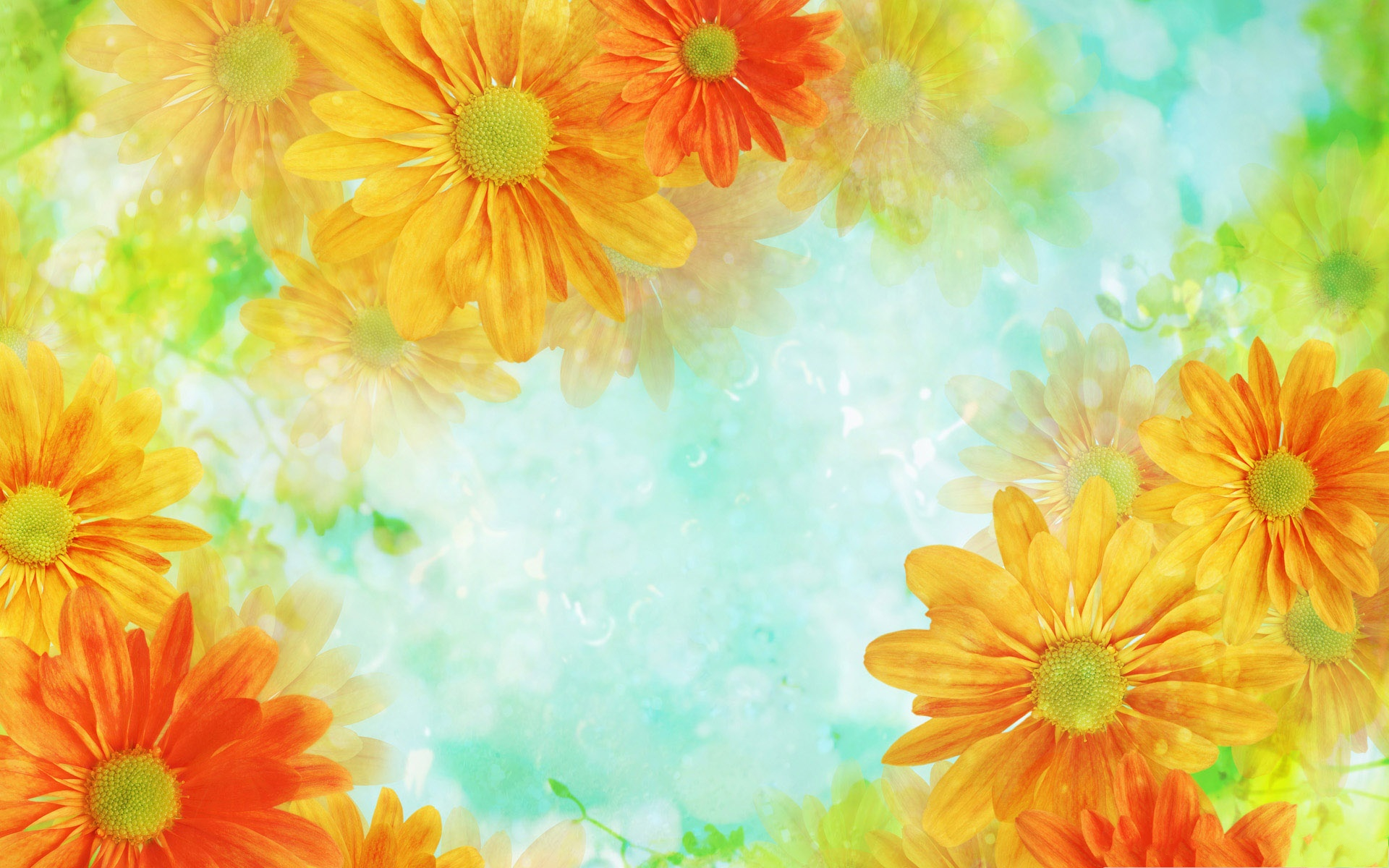 click to free download the wallpaper--Colorful Flowers Picture, Orange Flowers in Bloom, Light Green Background 1920X1200 free wallpaper download