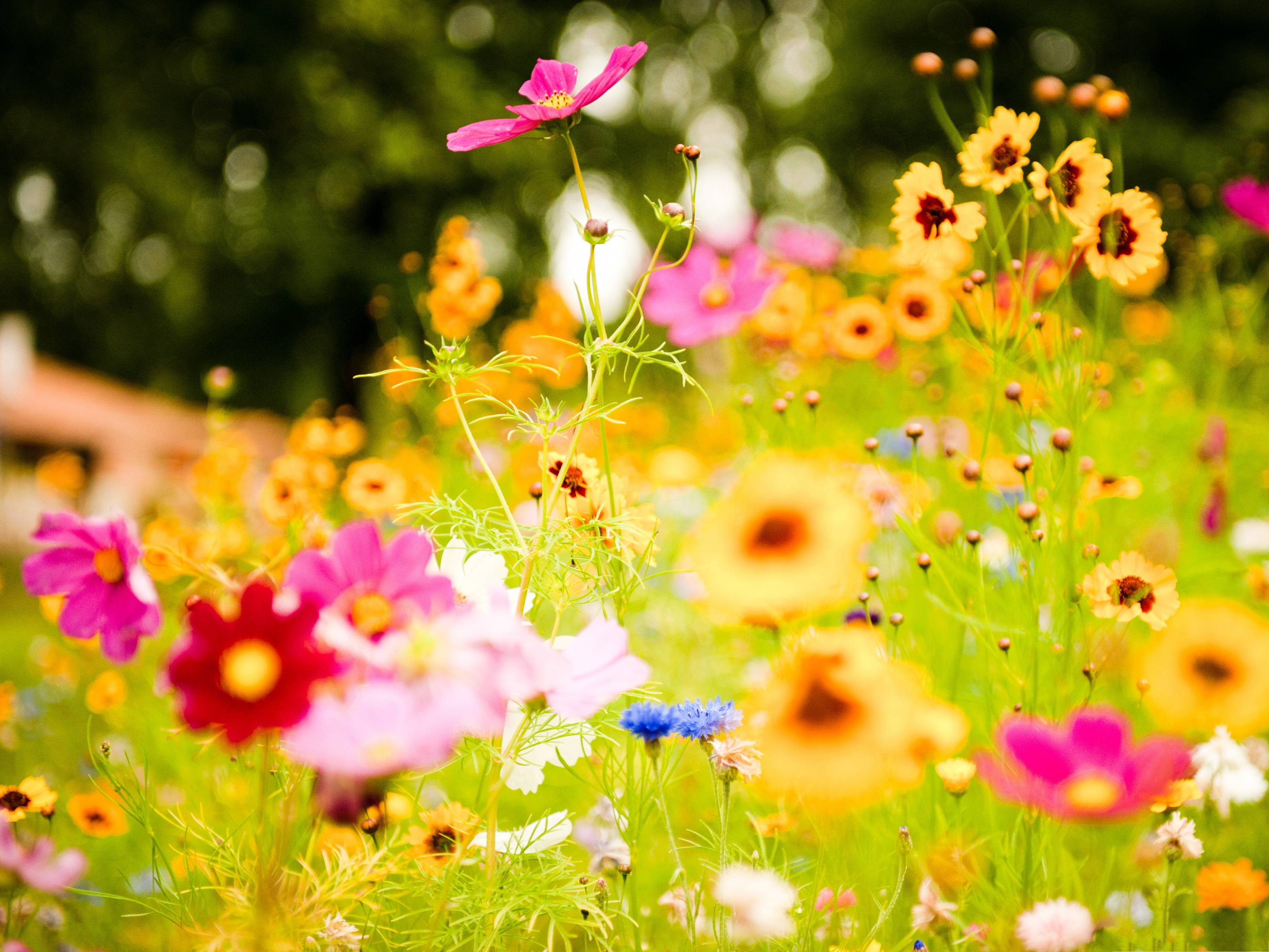 click to free download the wallpaper--Colorful Flowers Picture, Tiny Flowers in Bloom, Green Grass Around 3200X2400 free wallpaper download