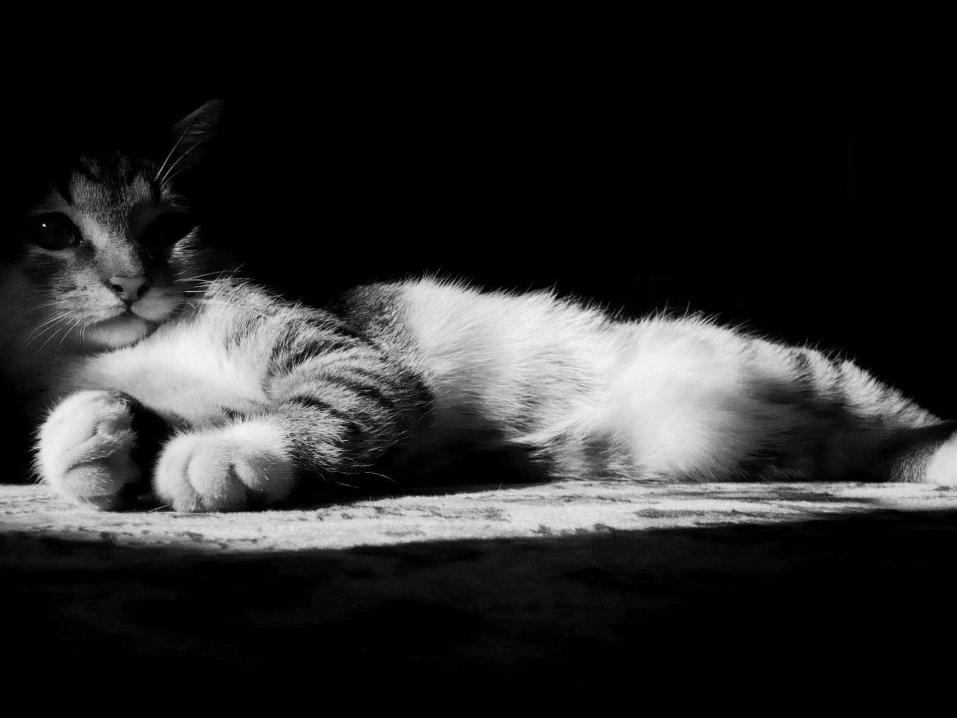 click to free download the wallpaper--Cute Animal Pics, Lazy Kitten in Black and White, Stay in Dark and Enjoy Sound Sleep 1920X1440 free wallpaper download