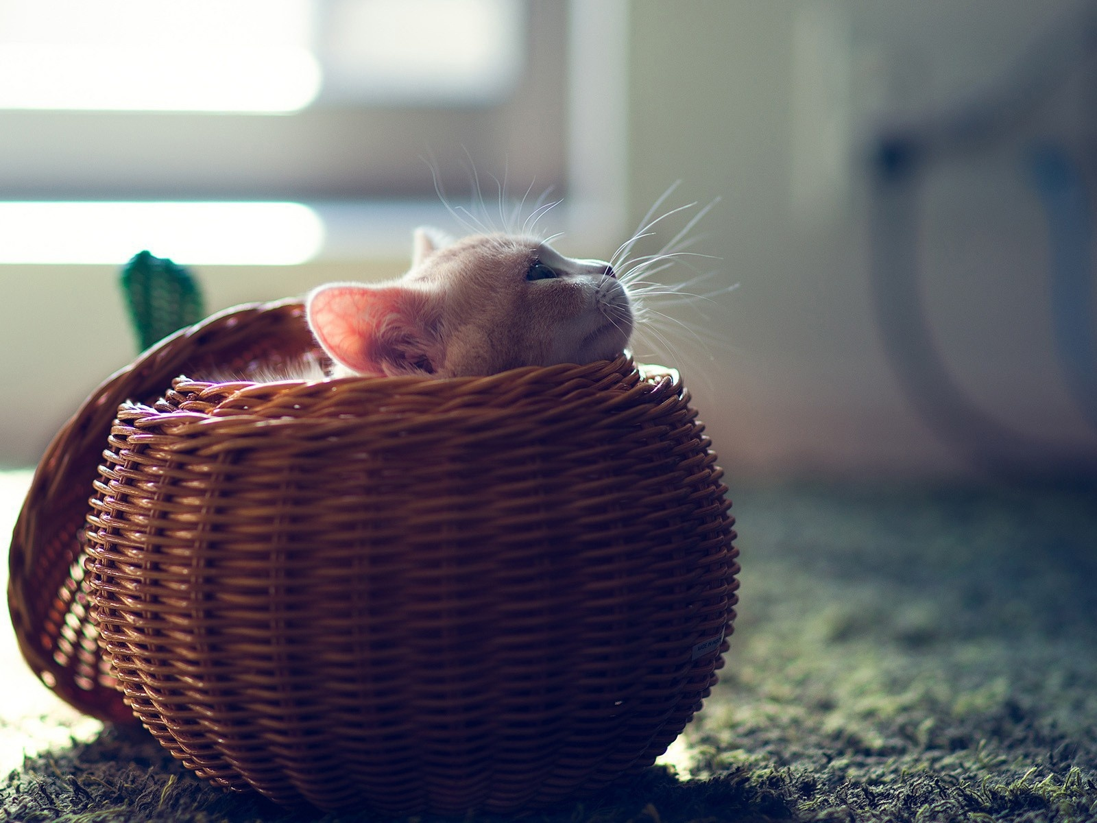 click to free download the wallpaper--Cute Animals Image, Cute Kitten in Basket, I Am Aweaken, Time to Go for a Walk 1600X1200 free wallpaper download