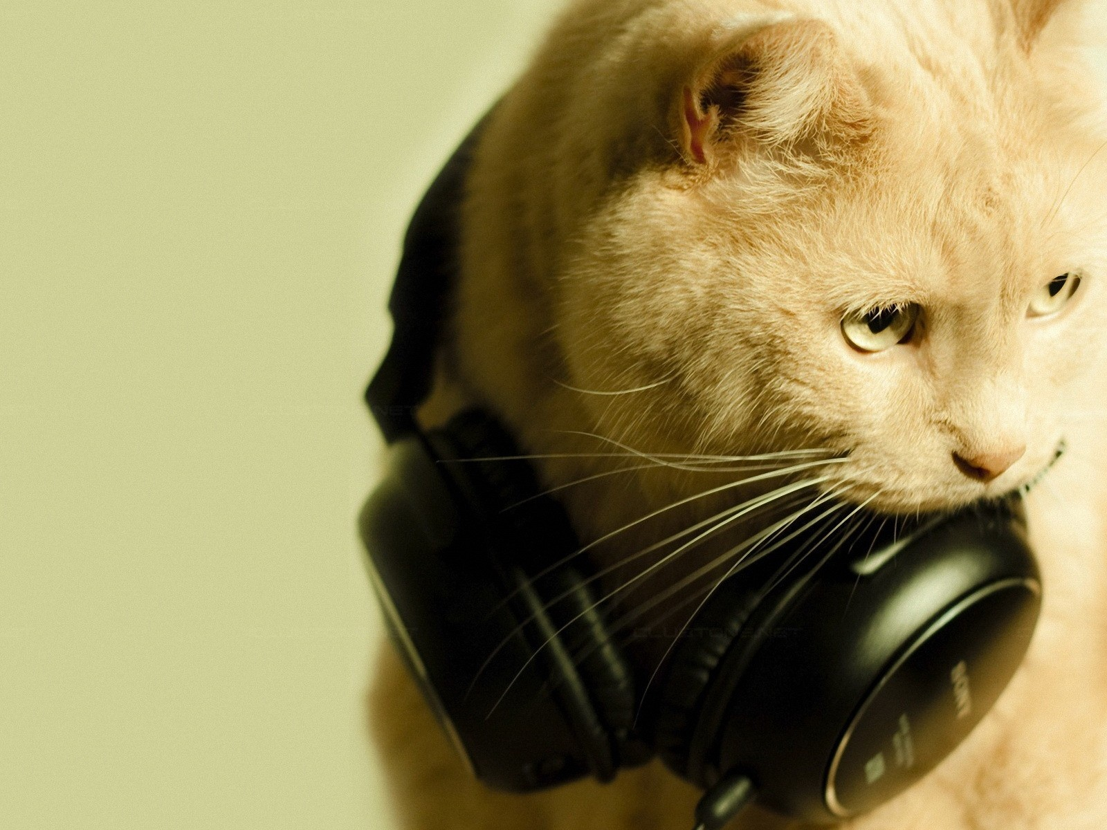 click to free download the wallpaper--Cute Animals Pic, Cat in Earphone, Can't Take It Off, Amazing Melody 1600X1200 free wallpaper download