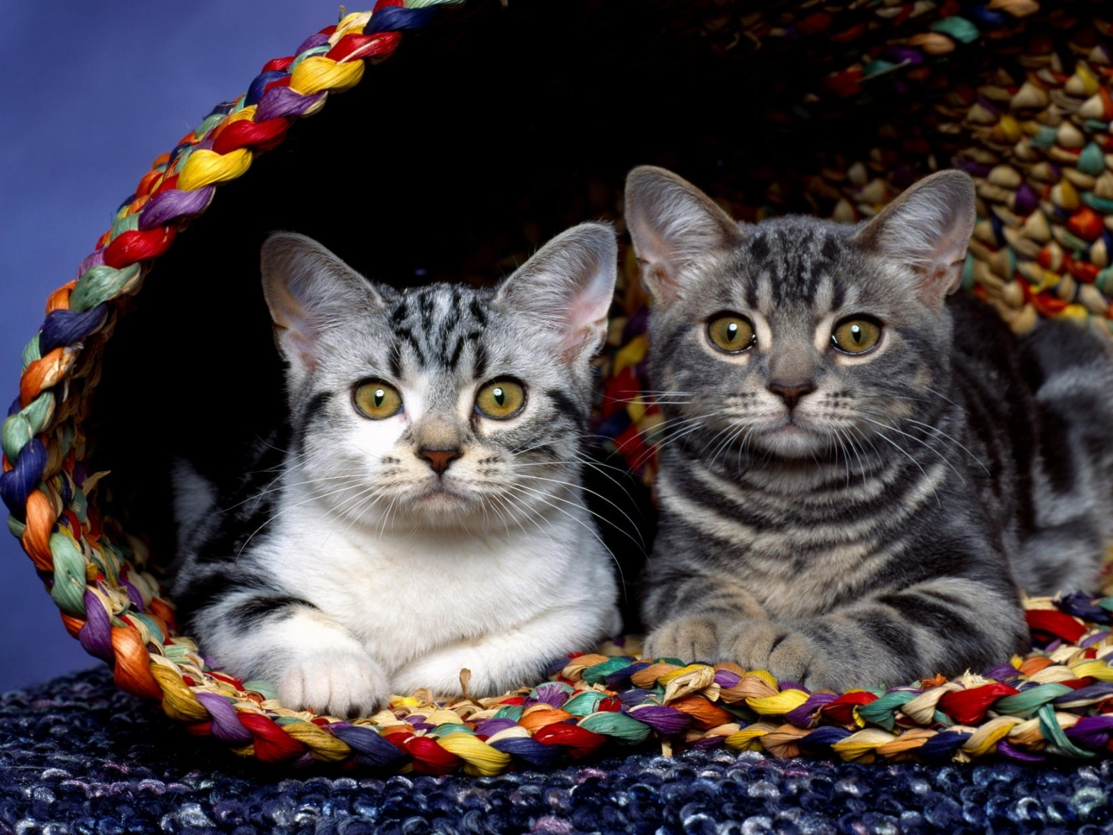 click to free download the wallpaper--Cute Animals Pic, Two Kitties in Basket, Different Colored Furs, Lots of Similarities 1600X1200 free wallpaper download