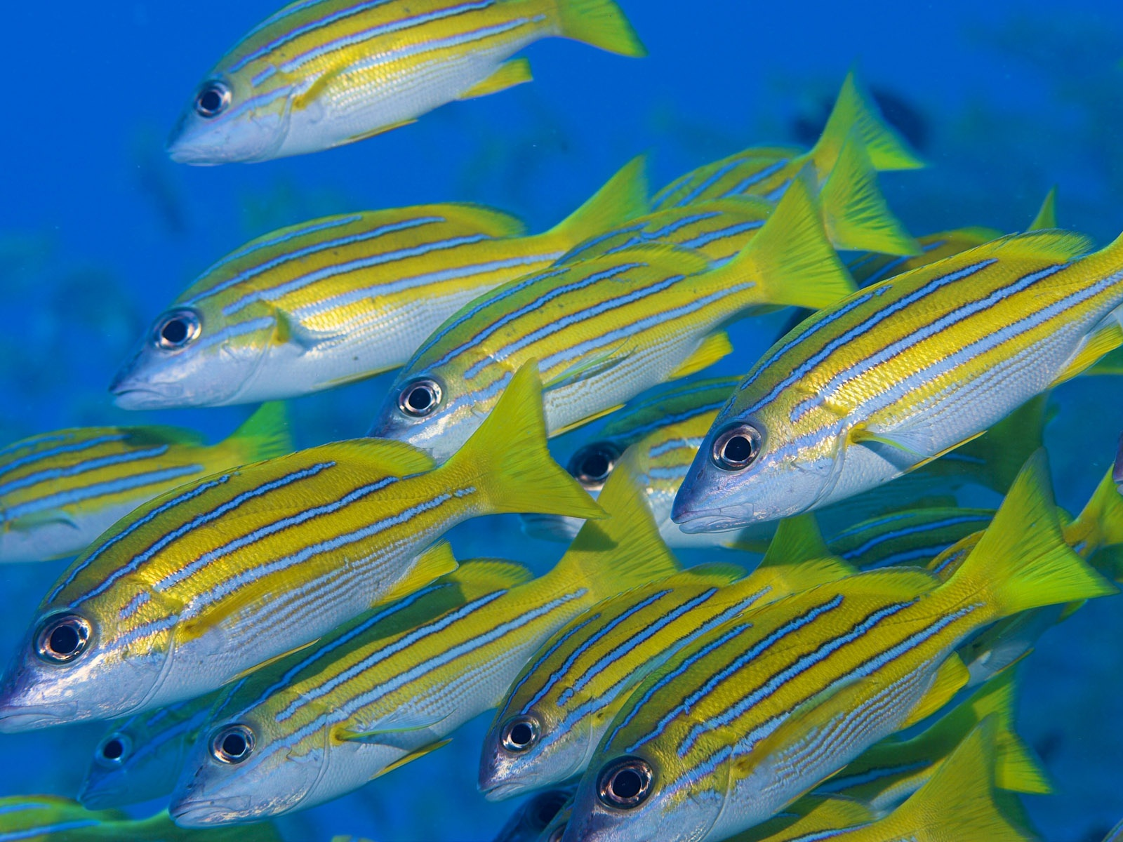 click to free download the wallpaper--Cute Animals Pic, a Group of Fishes in Swim, Colorful and Beautiful 1600X1200 free wallpaper download