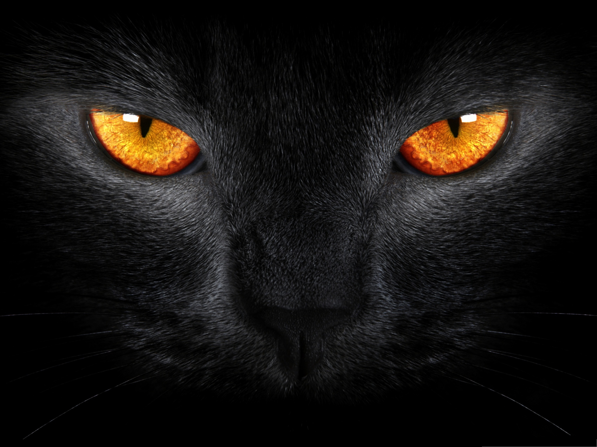 click to free download the wallpaper--Cute Cat Images, Black Cat in Smooth Fur, Golden Shinning Eyes 2048X1536 free wallpaper download