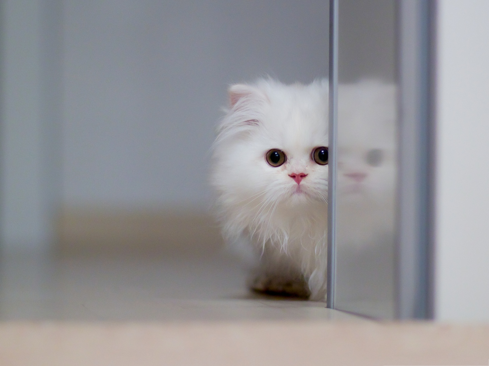 click to free download the wallpaper--Cute Cat Images, White and Cute Kitten, Unwilling to Get Out 1600X1200 free wallpaper download