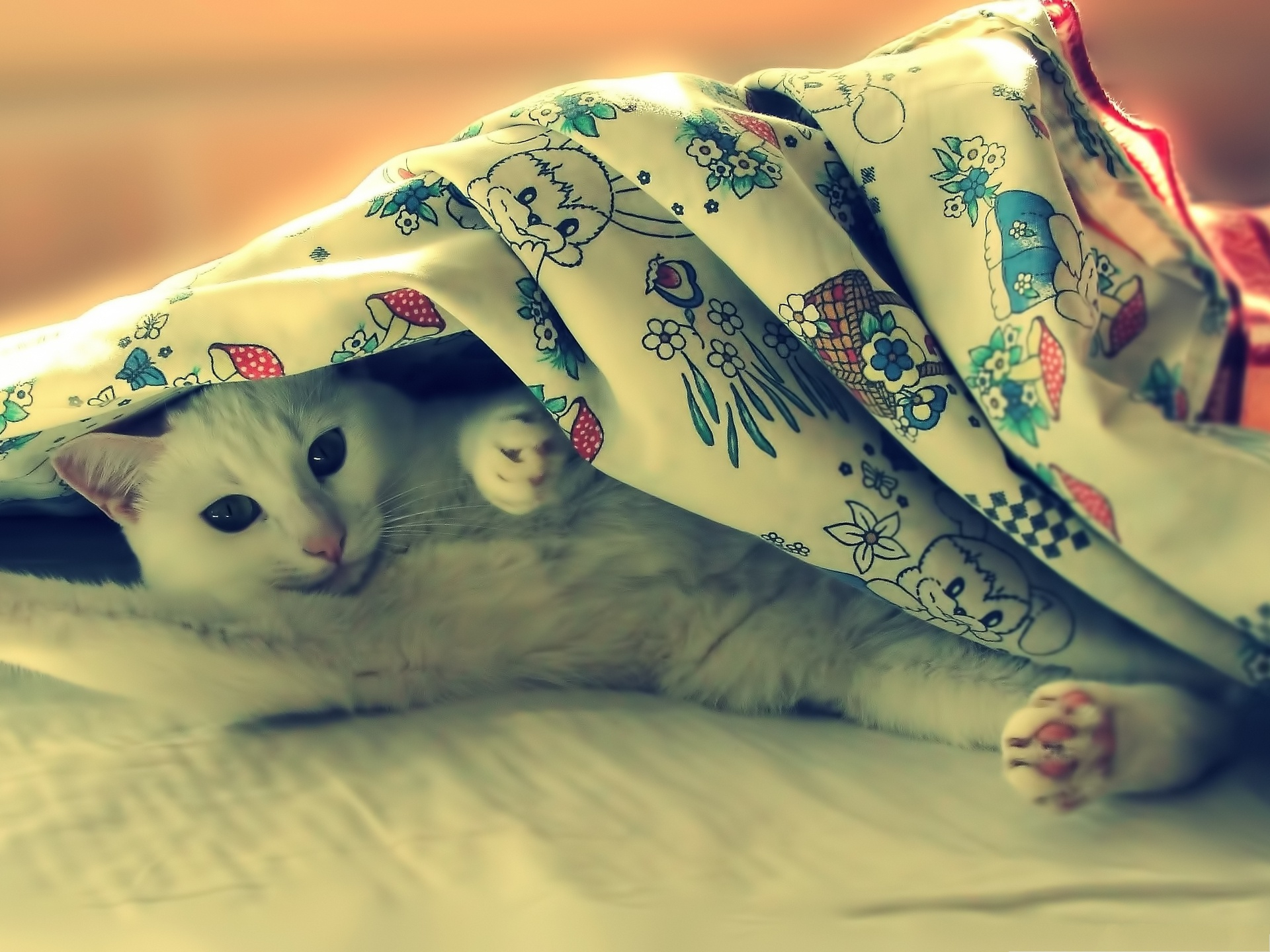 click to free download the wallpaper--Cute Cat Picture, Kitten Hiding Under a Blanket, Morning, Sweetie! 1920X1440 free wallpaper download