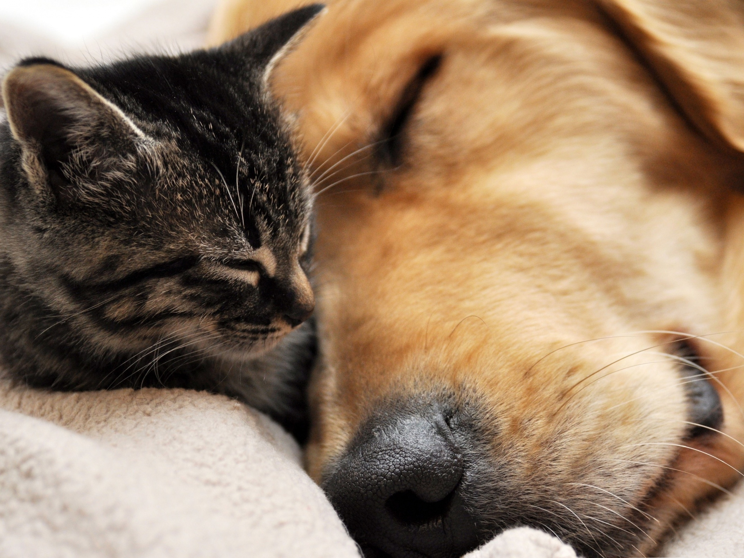 click to free download the wallpaper--Cute Cats Photography, Sleeping Kitten and Puppy, Close to Each Other 2560X1920 free wallpaper download