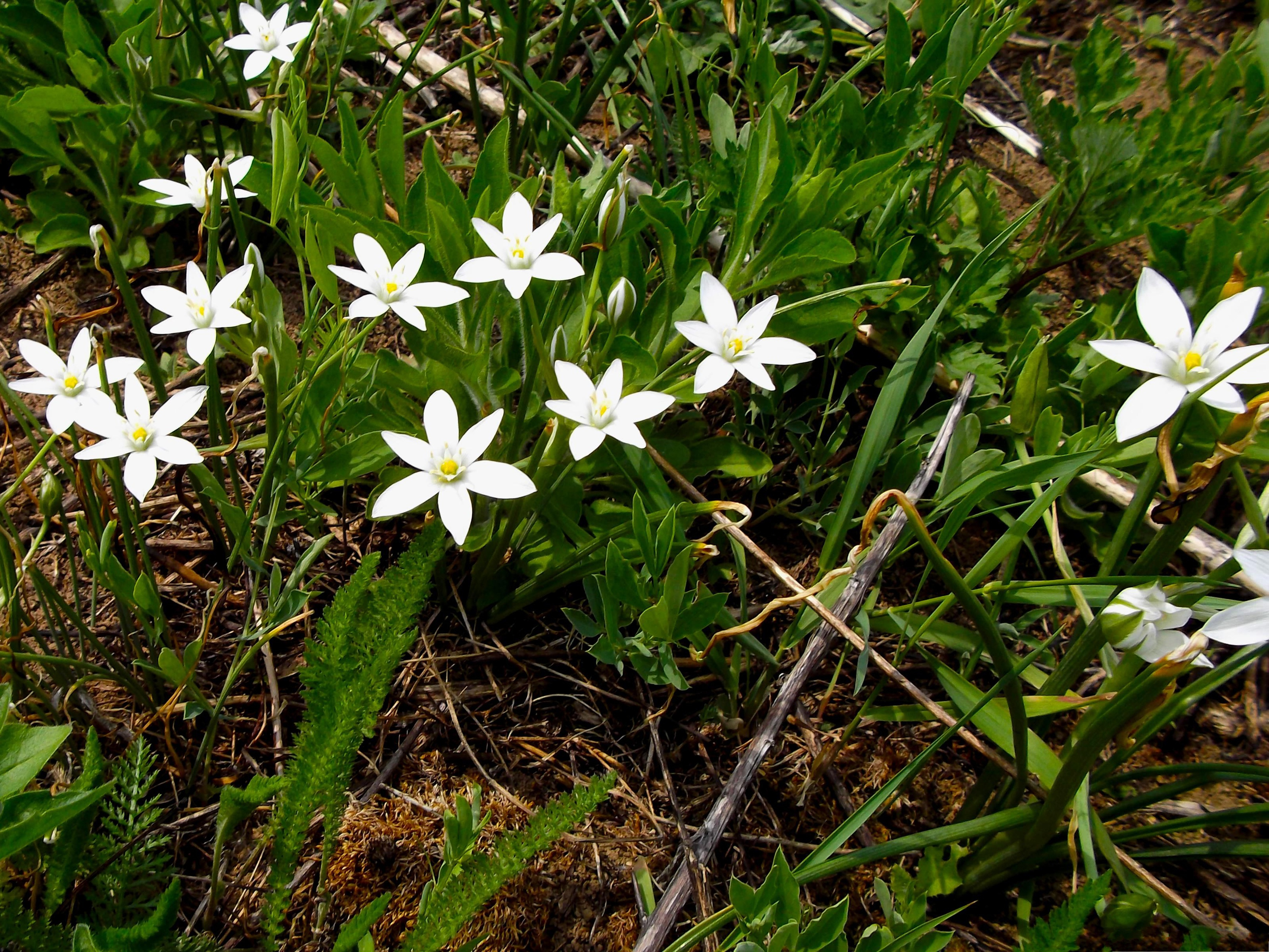 Dexter Flowers Picture Tiny White Flowers Around Green Grass Nice