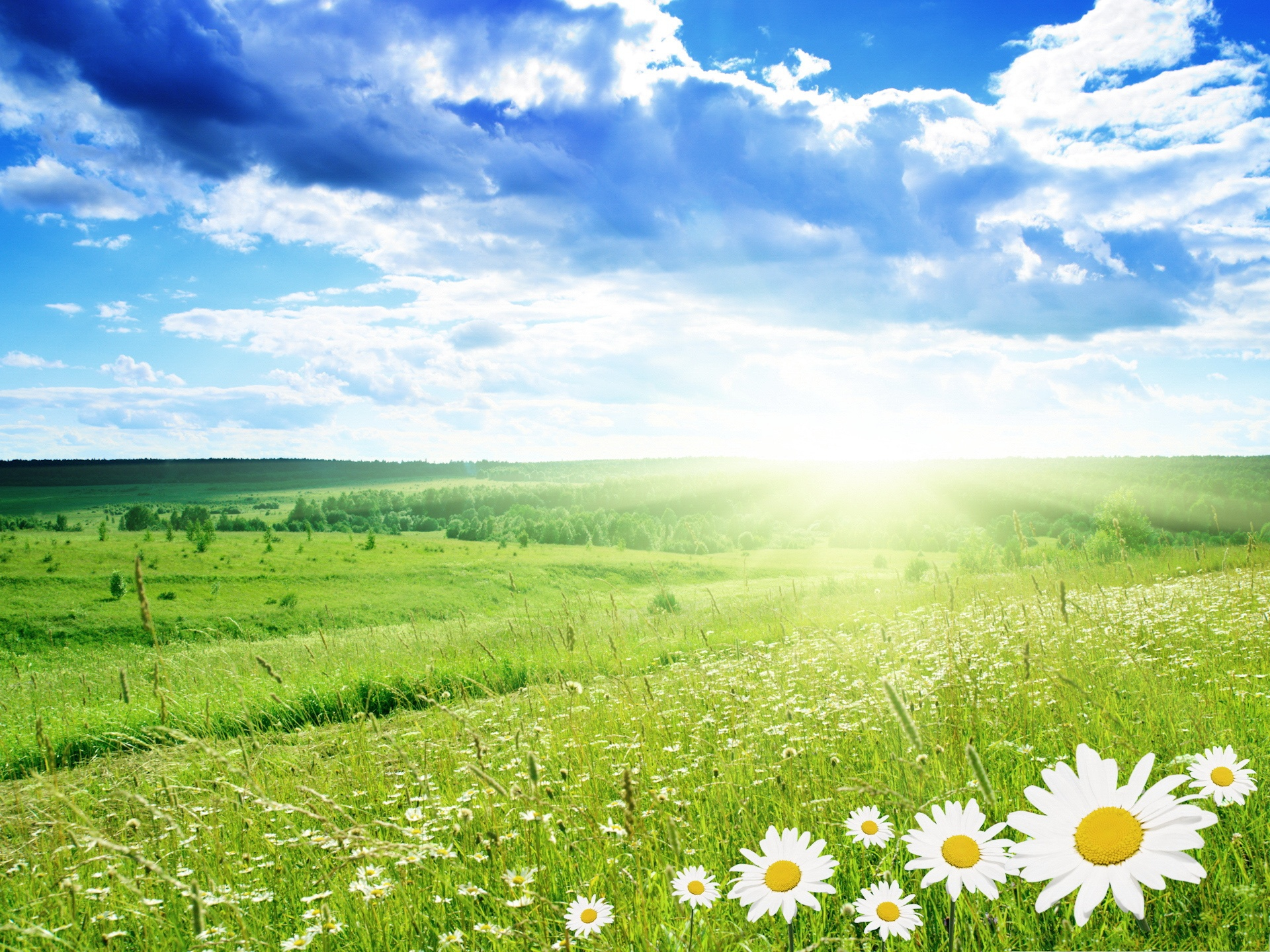 Images Of White Flower Field Background Spacehero
