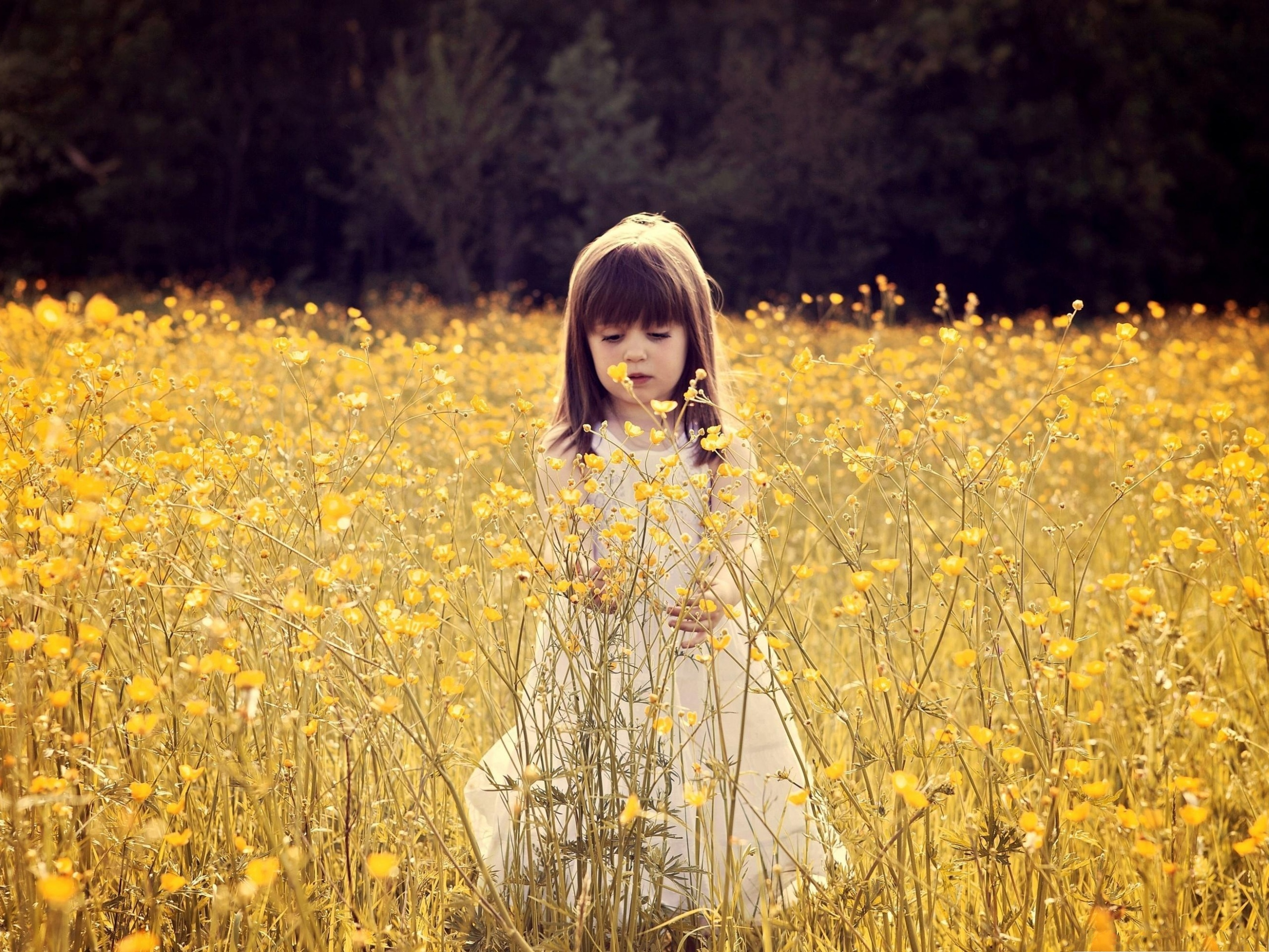 click to free download the wallpaper--Flower Field Photography, Cute Baby Girl in Yellow Flower Sea, Having Great Fun 2560X1920 free wallpaper download