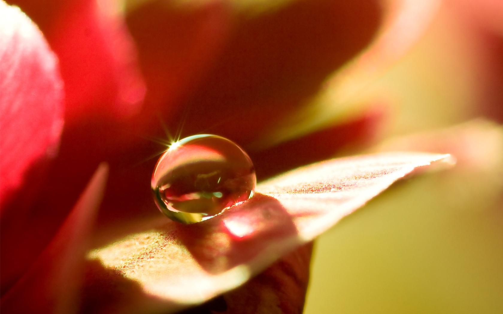 Flower with waterdrop morning scene crystal clear waterdrop