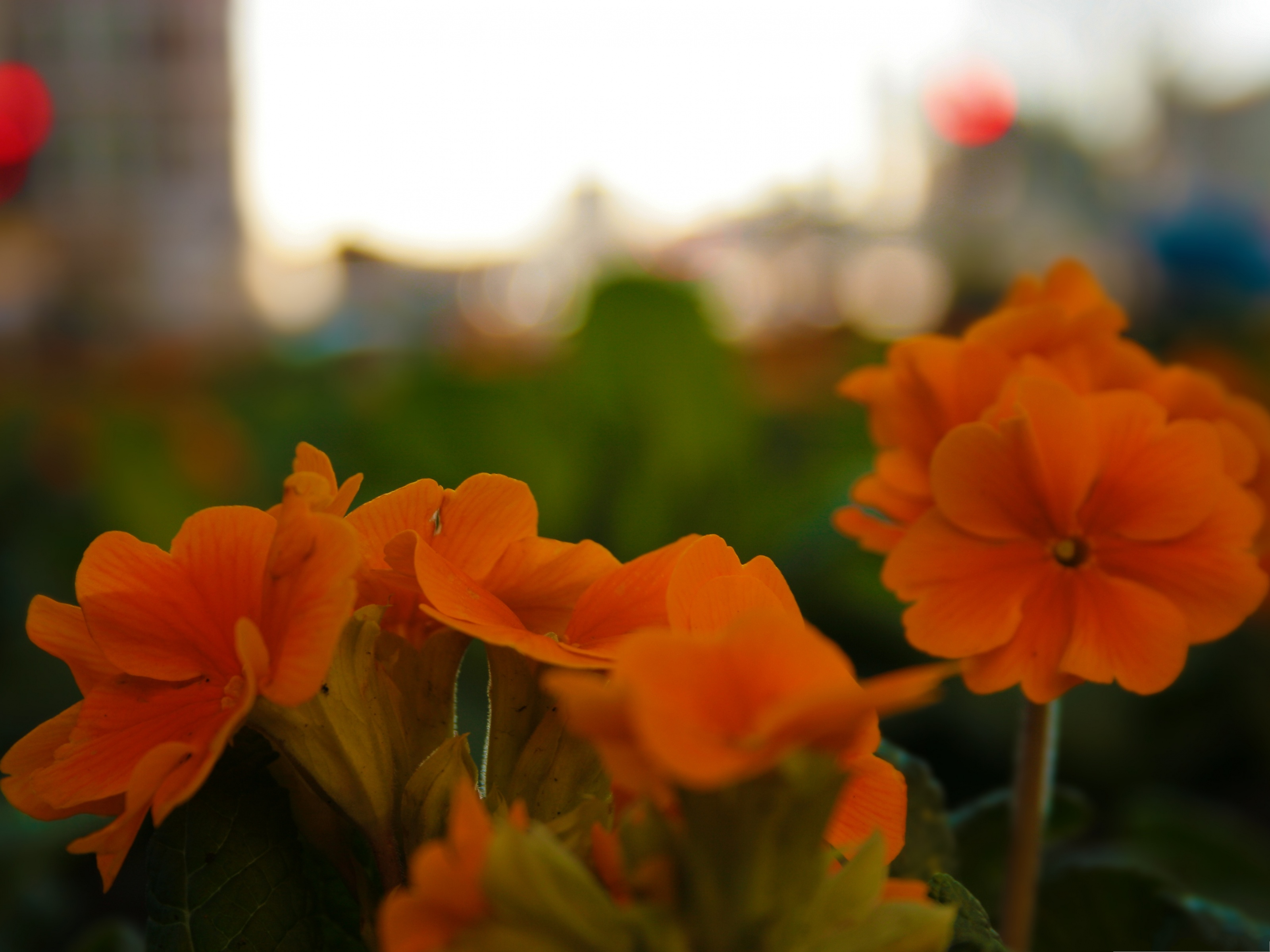 click to free download the wallpaper--Flowers At Blackfriars, Orange Flowers in Bloom, Green Background 3200X2400 free wallpaper download