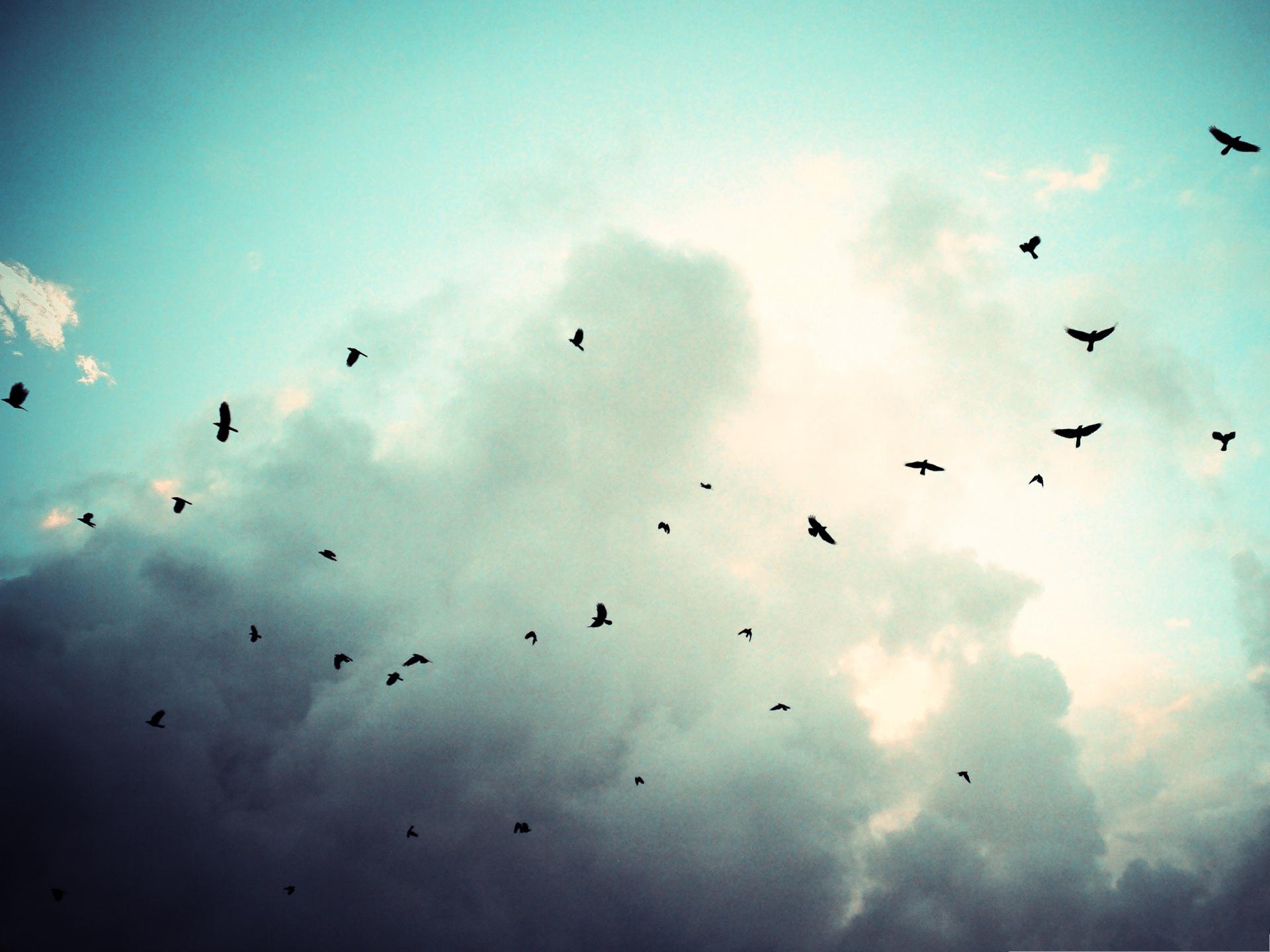 Black birds flying background