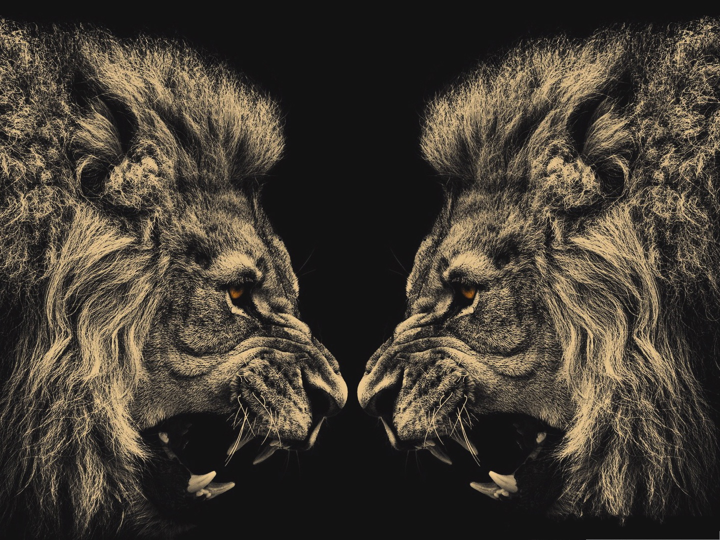 click to free download the wallpaper--Free Desktop Pictures, Two Lions Screaming Toward Each Other 1440X1080 free wallpaper download