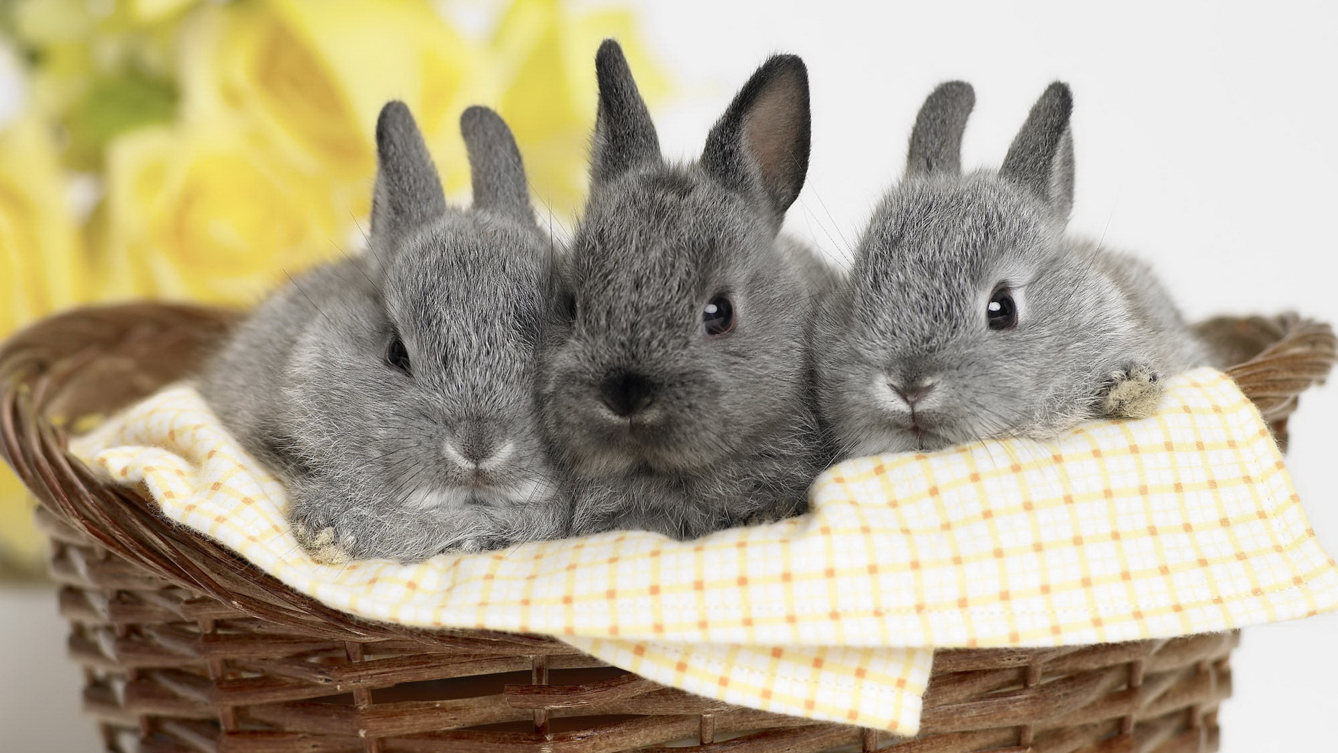 click to free download the wallpaper--Free Download Cute Animals Picture - Three Rabbits in a Small Basket, Innocent Facial Expression, Cuties! 1920X1080 free wallpaper download