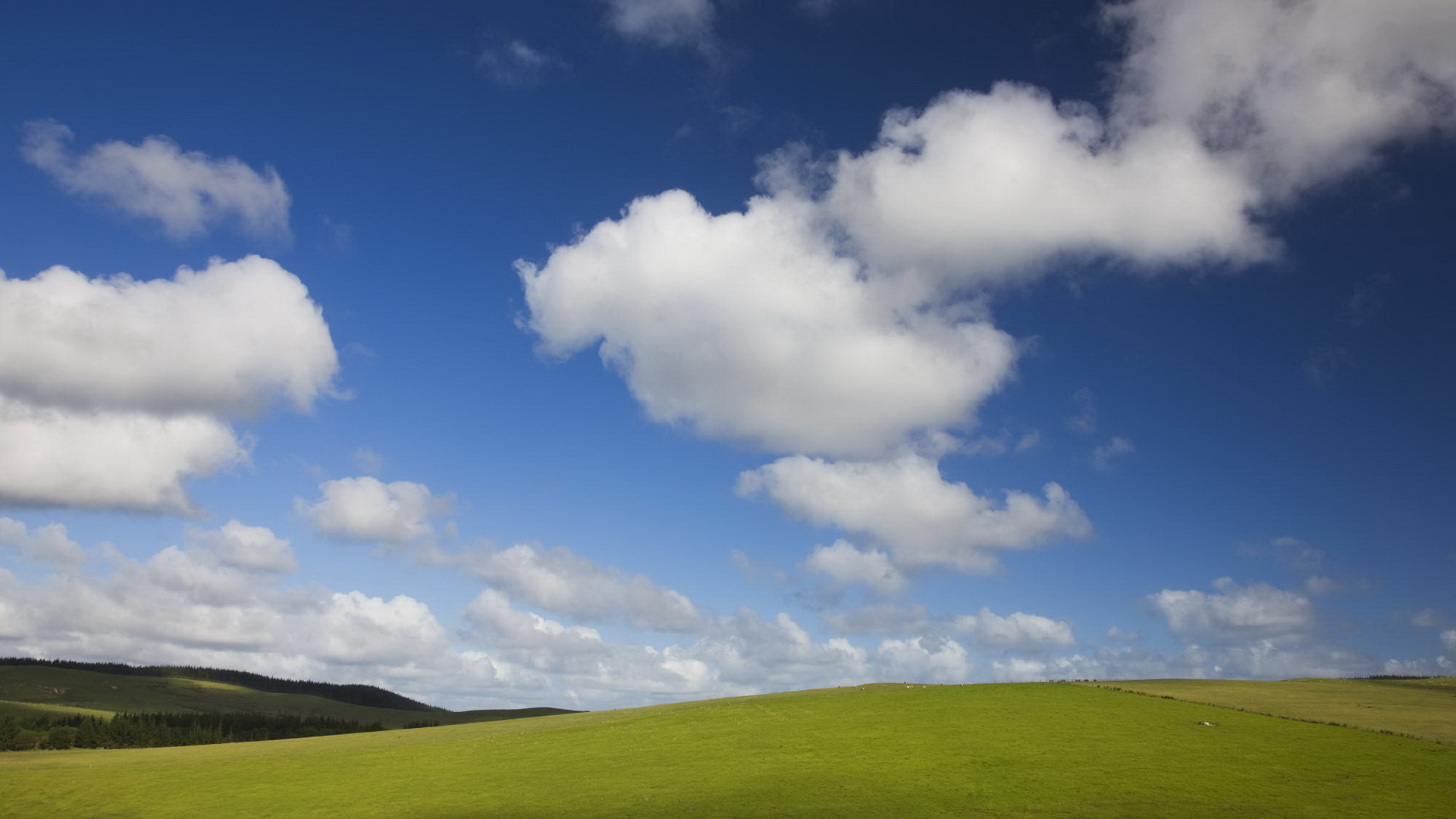 click to free download the wallpaper--Free Download Natural Scenery Picture - A Field of Green Grass Under the Blue Sky, Great Natural Scene 1920X1080 free wallpaper download