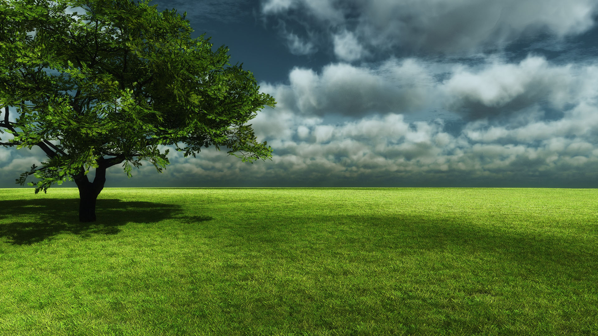 Natural Grass Wallpaper Free Download Natural Scenery