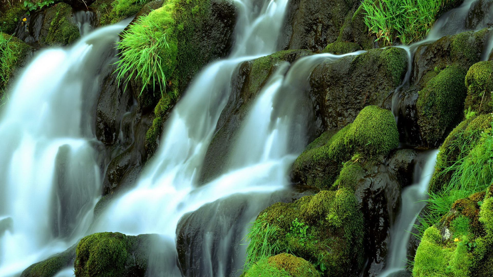 click to free download the wallpaper--Free Download Natural Scenery Picture - A Waterfall Passing Through the Green Stones, a Clean and Fresh World 1920X1080 free wallpaper download