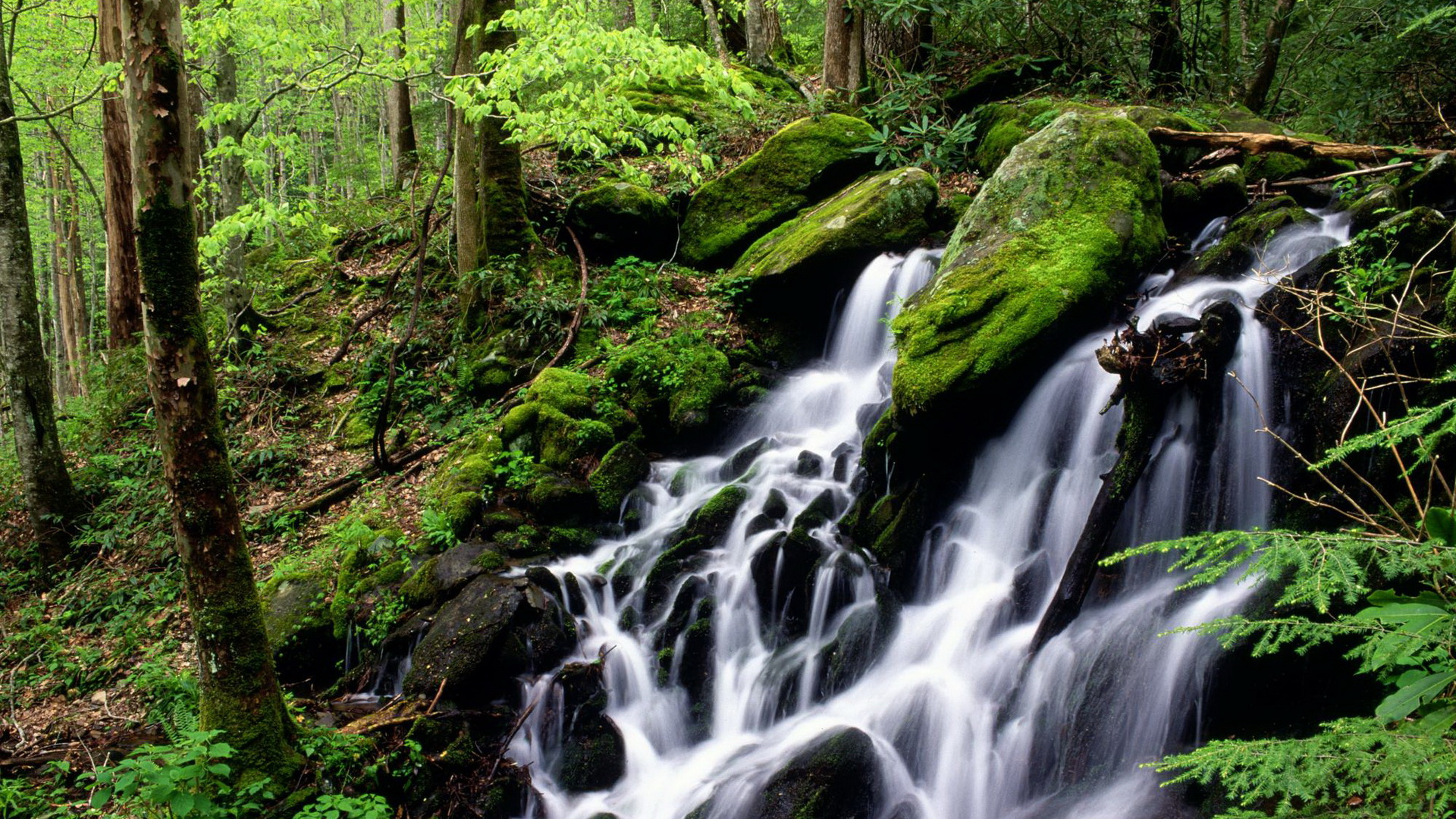 click to free download the wallpaper--Free Download Natural Scenery Picture - A Waterfall in Rapid Flow, Green Plants Alongside, Combine Quite a Scene 1920X1080 free wallpaper download