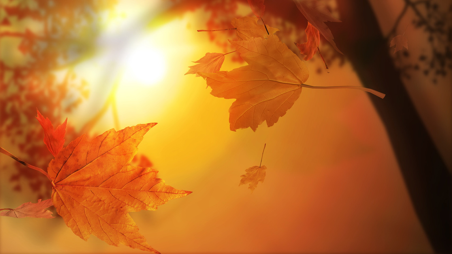click to free download the wallpaper--Free Download Natural Scenery Picture - Maple Leaves Are Falling, the Rising Sun, Beautiful and Romantic Scene 1920X1080 free wallpaper download