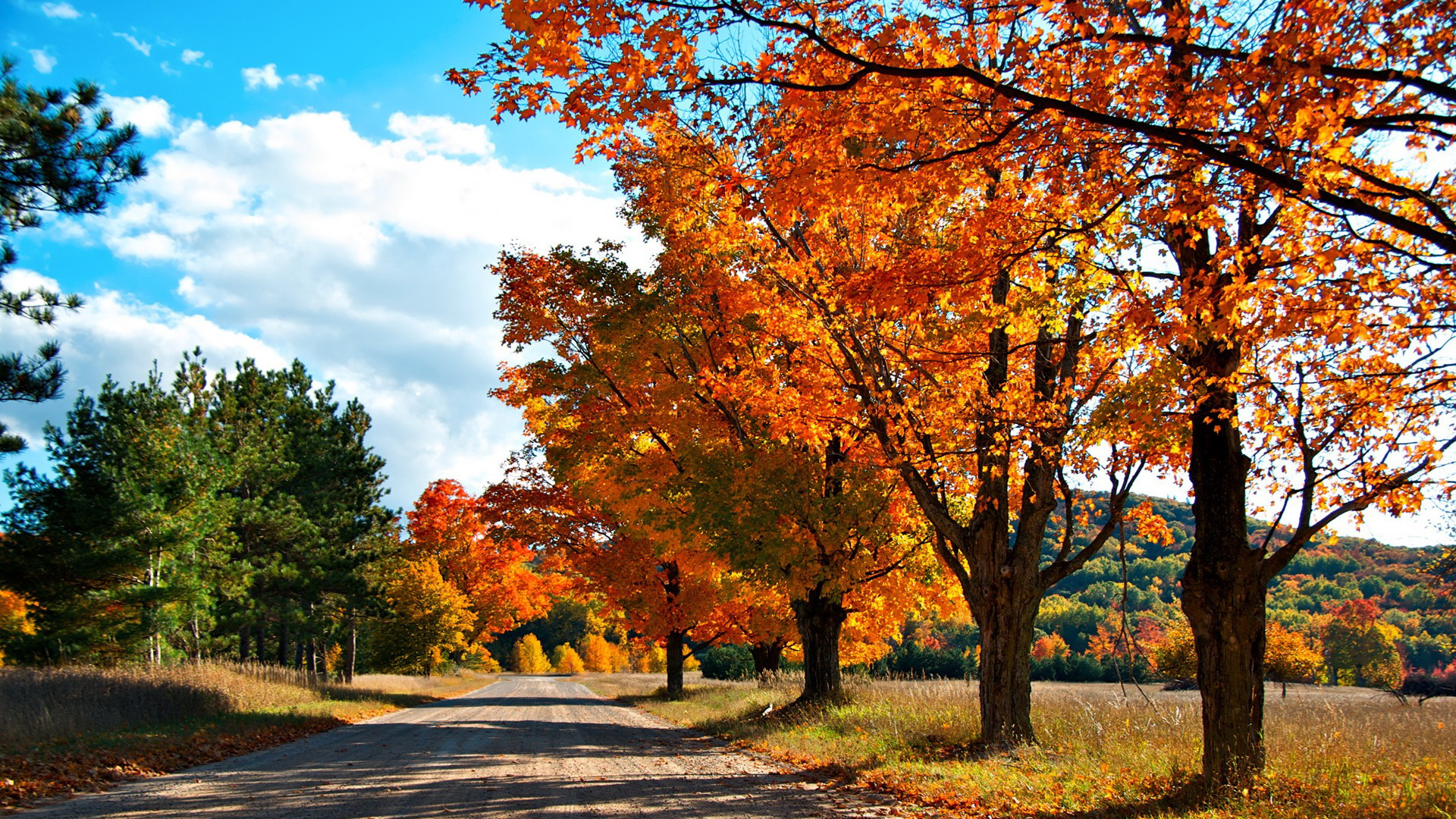 Free Download Natural Scenery Picture - Tall Trees with Red Leaves, the Blue Sky, Shades All Over the Road 1920X1080 free wallpaper download