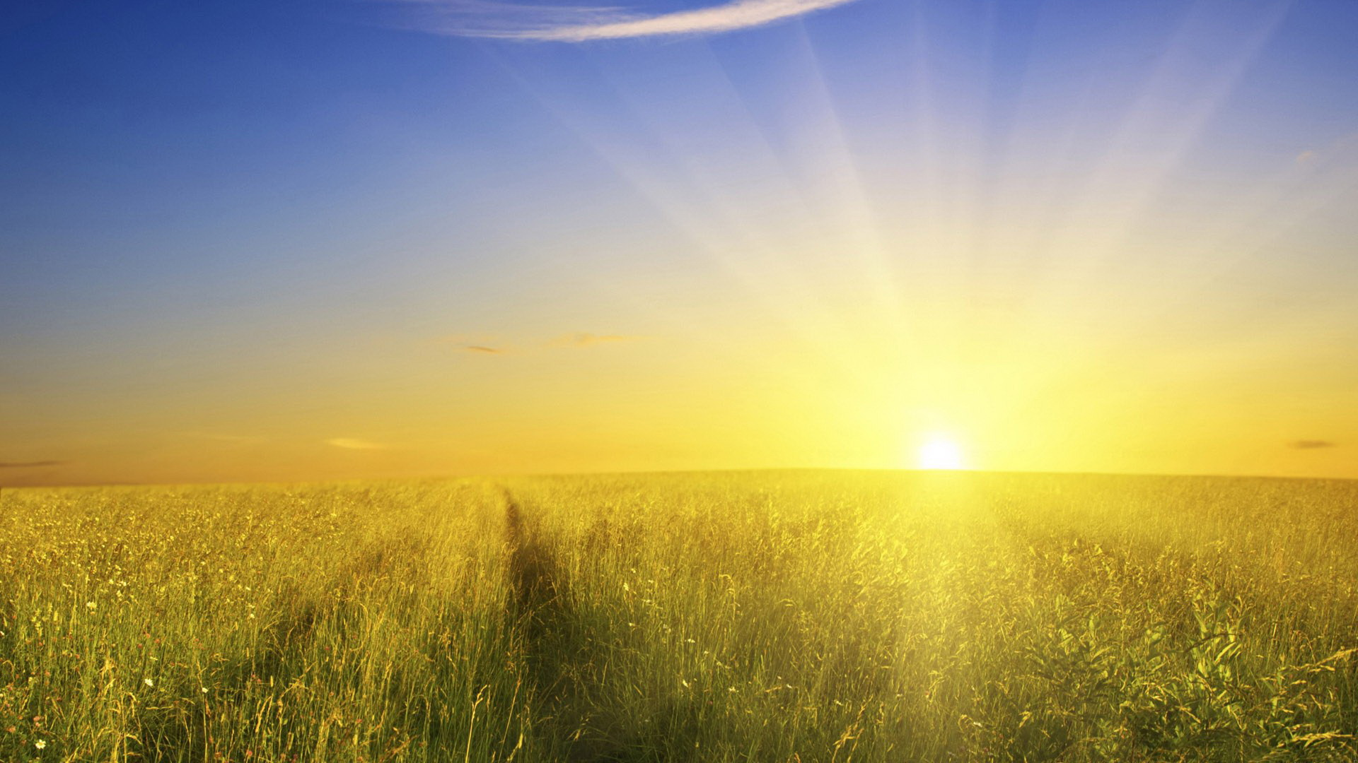 Free Rural Scene Pics - The Rising Sun and the Blue Sky, Wheats Will Soon be Ripe with Them 1920X1080 free wallpaper download