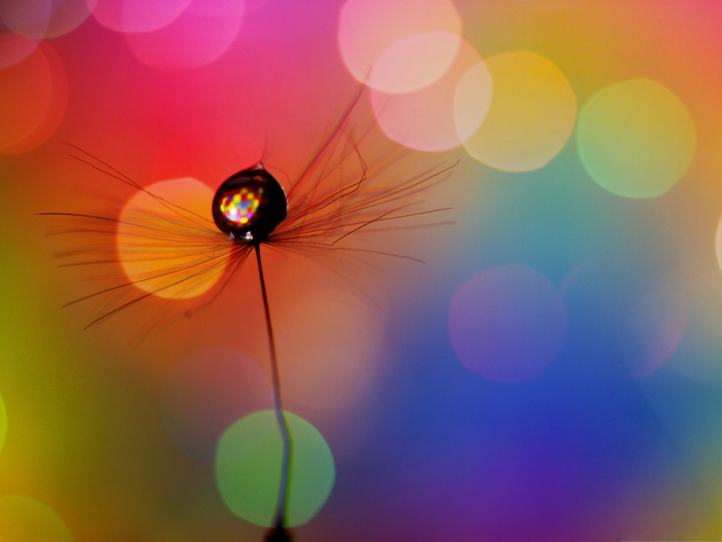click to free download the wallpaper--Free Wallpaper Background, Drop In a Dandelion Seed, Nice Color Combination 2800X2100 free wallpaper download