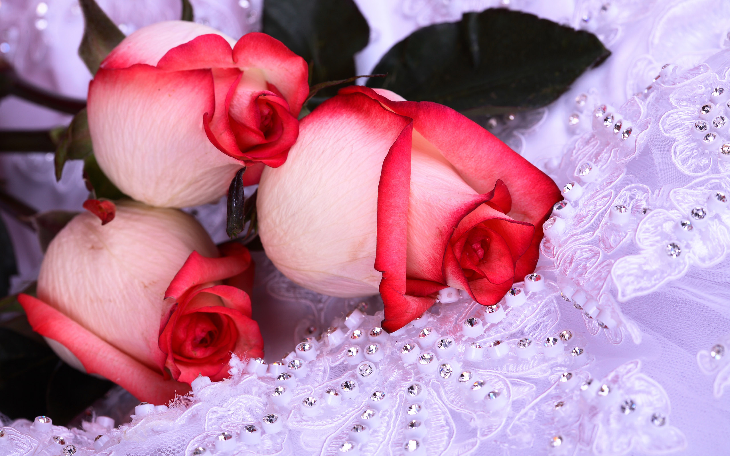 Beautiful Pink Rose Wallpaper Rose Pictures